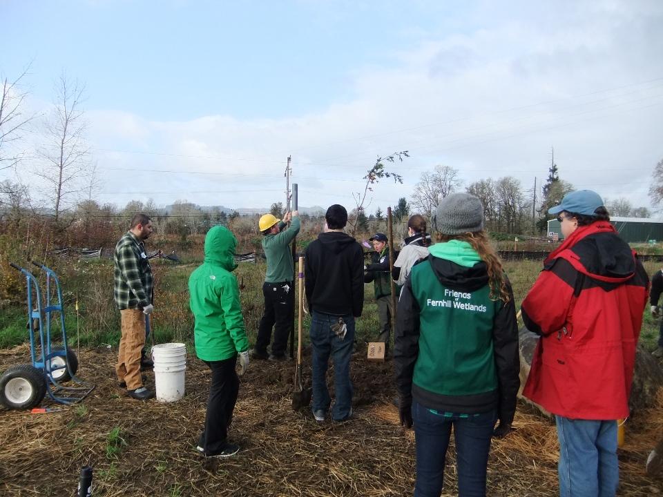 Volunteer Tree Planting