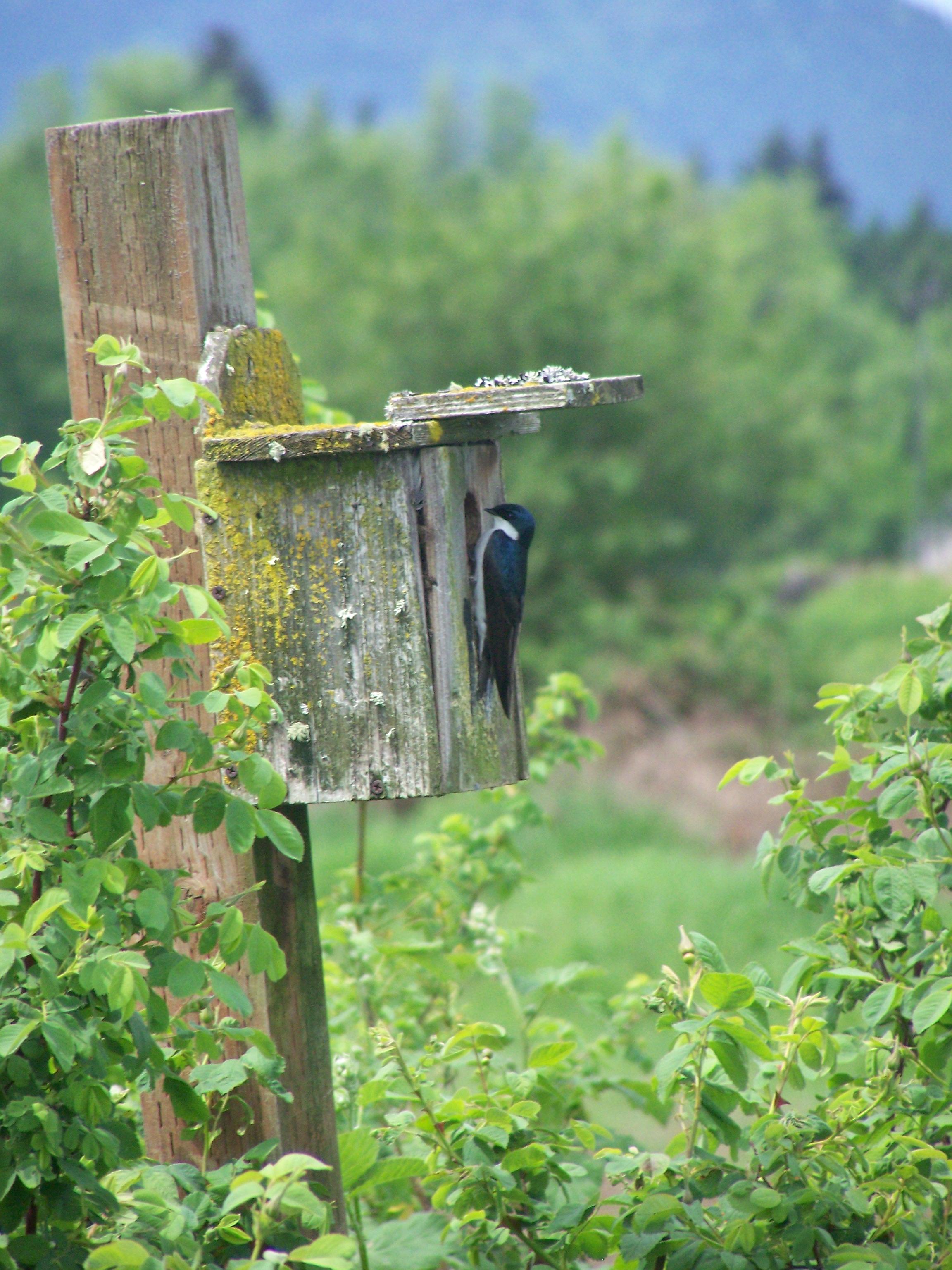 Birdhouse at Fernhill
