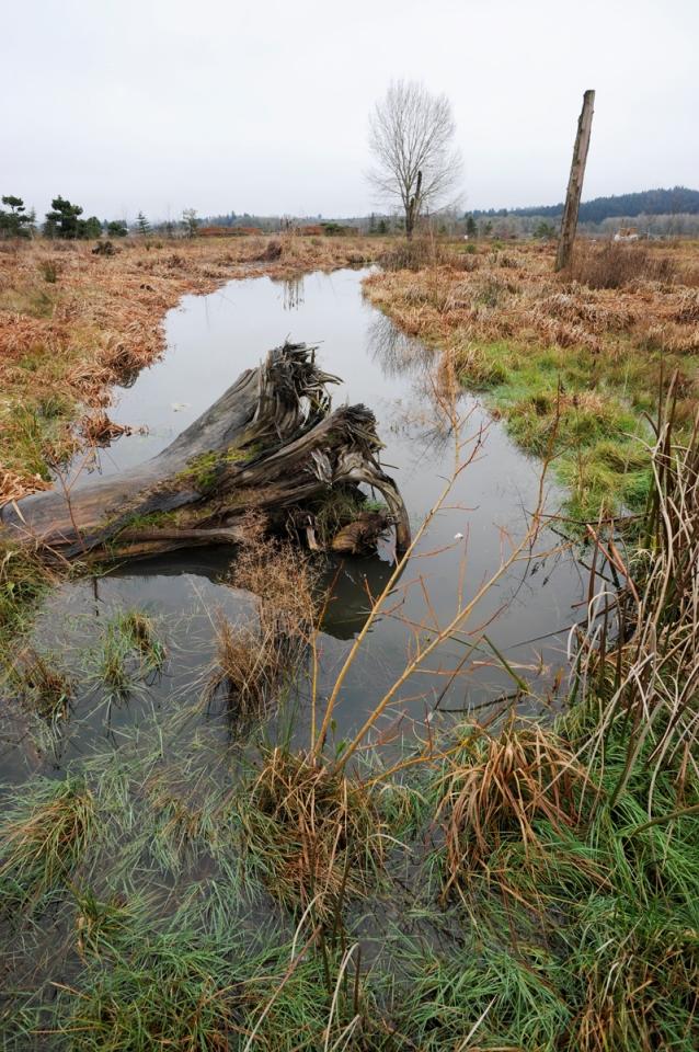 Rootwad in the Wetlands