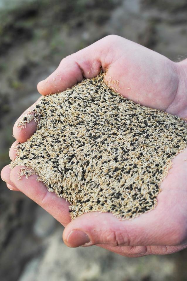 4 Billion Seeds