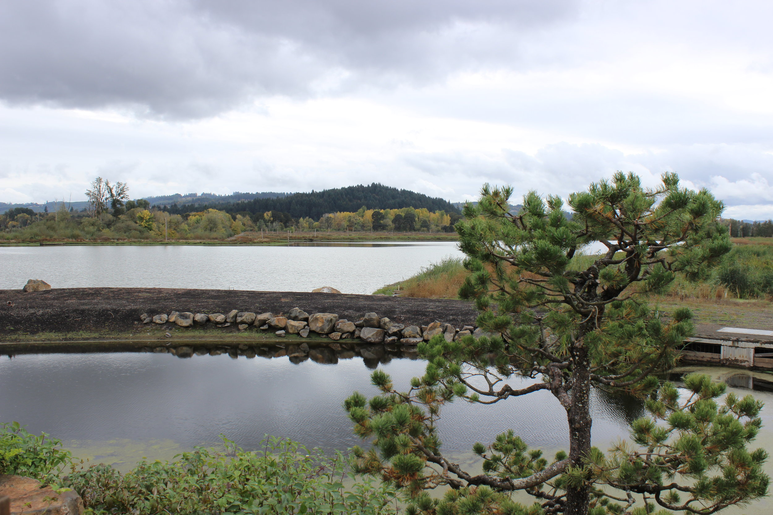 View of Fernhill Lake 2016