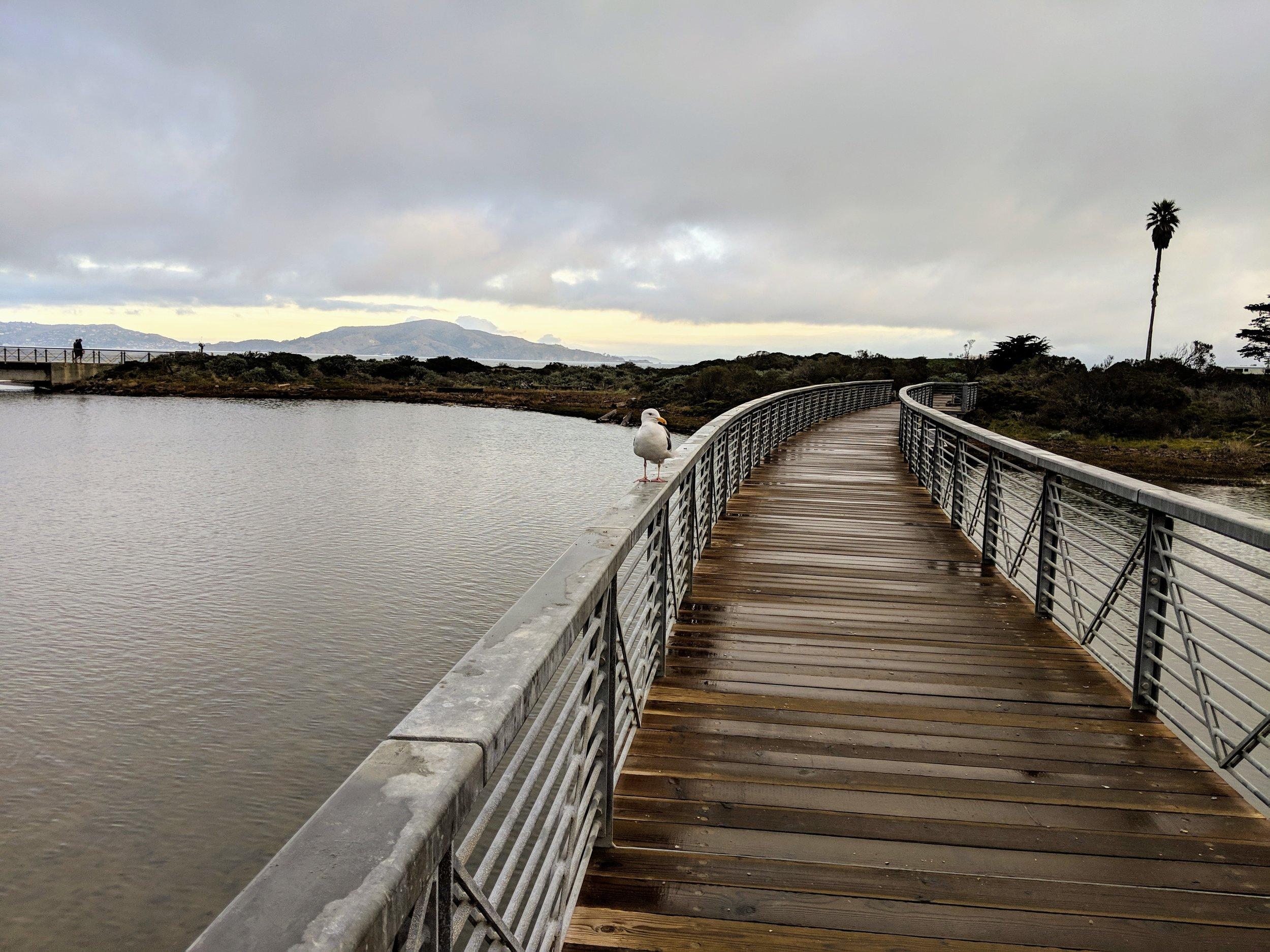 Presidio - at Chrissy Field Beach
