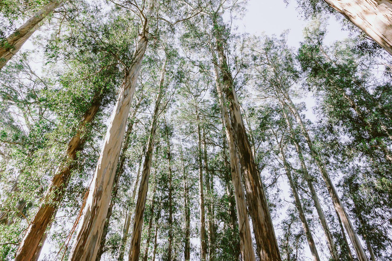 Trees at UC Berkeley