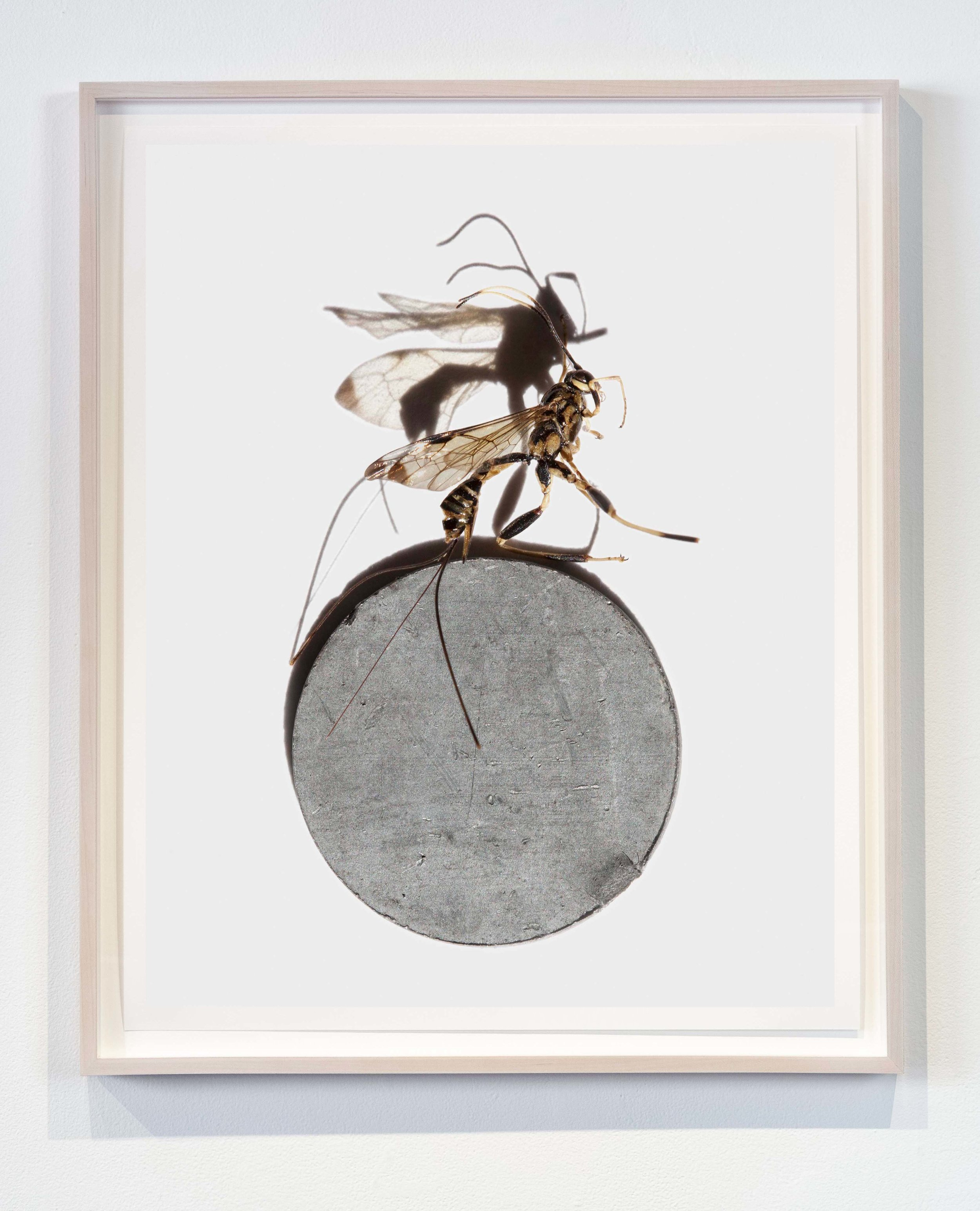 Wasp on Metal  20x25 inches