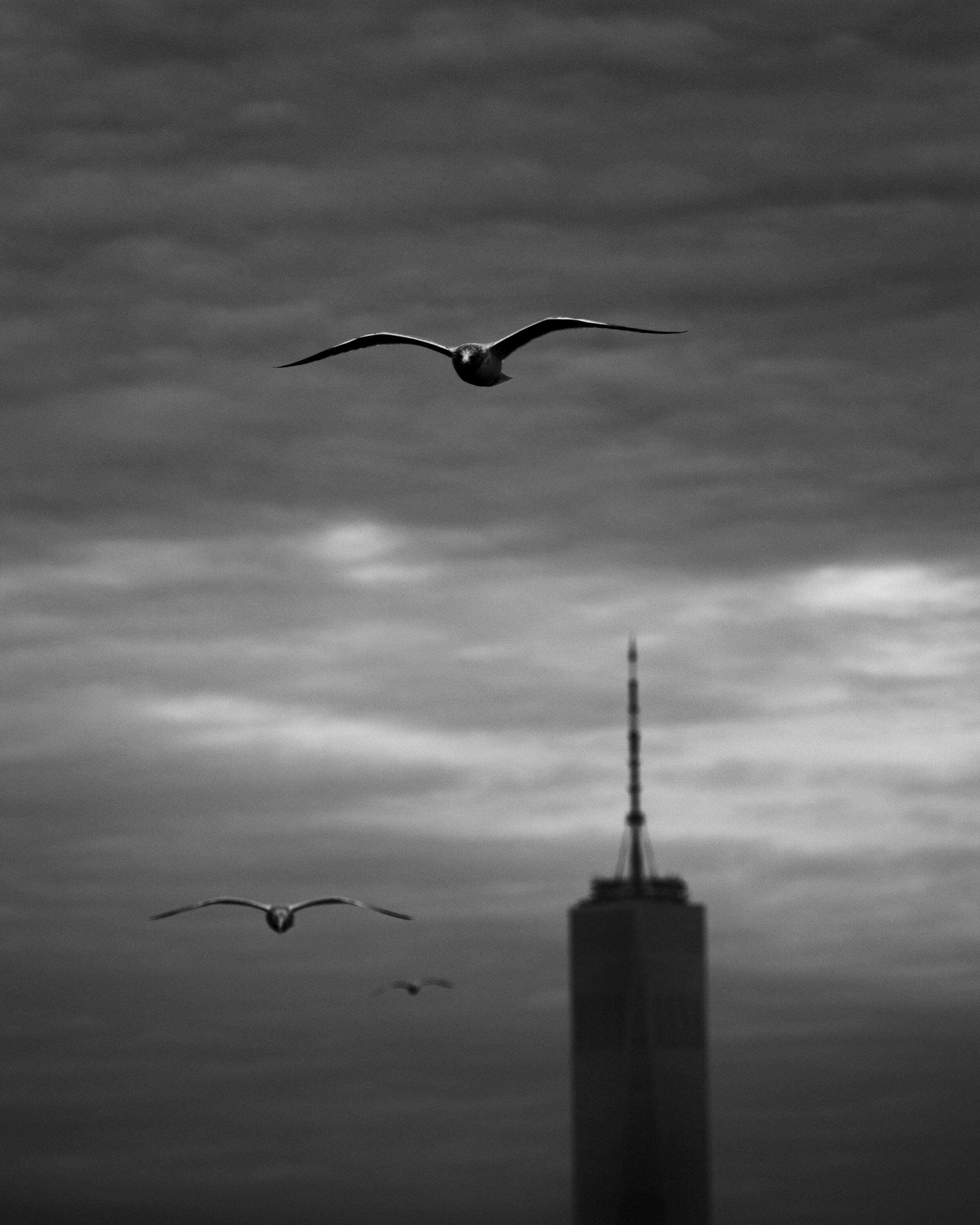 Triple Seagull Line Up.jpg
