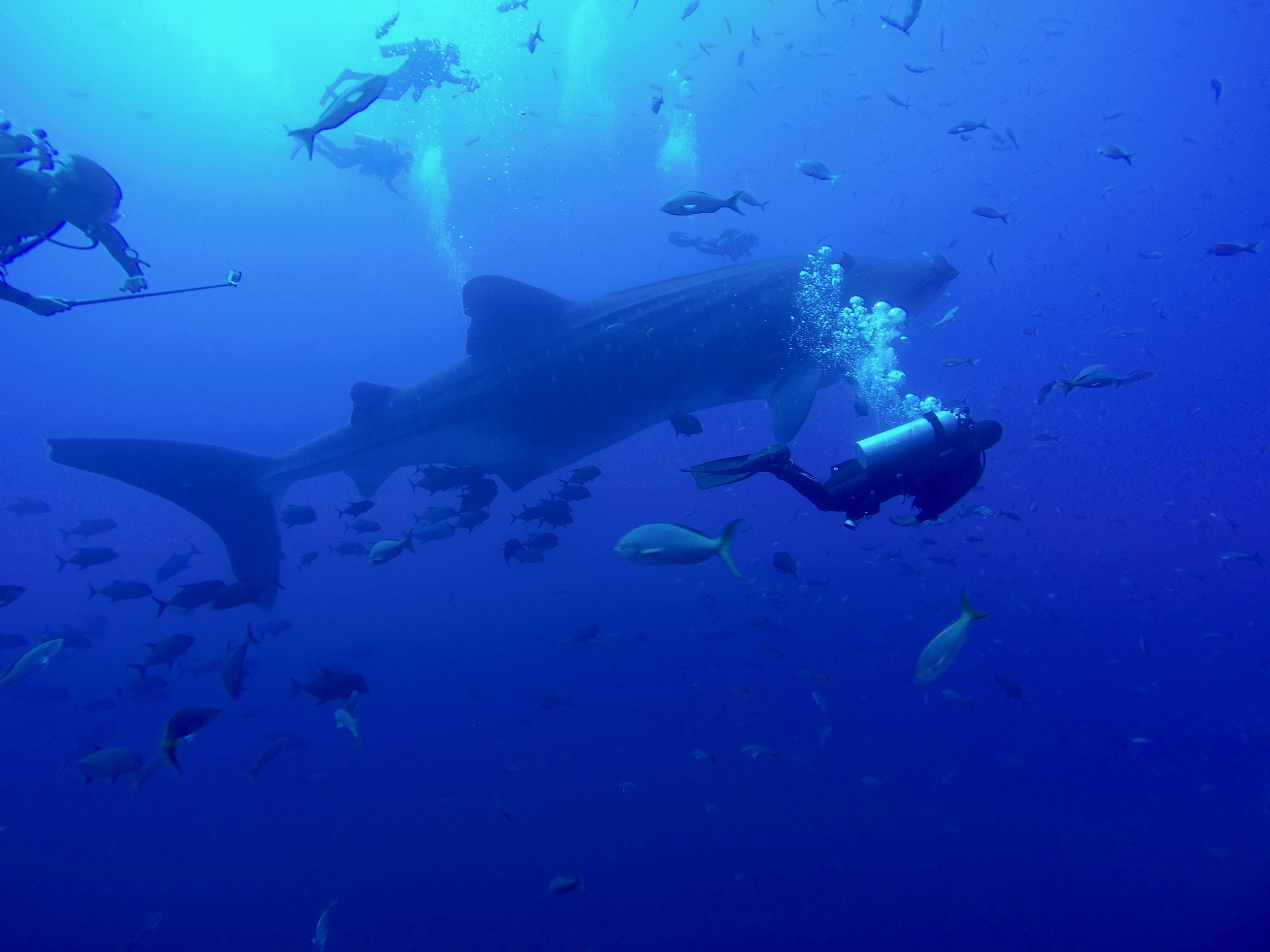 RocaPartida_Whaleshark 2.jpg