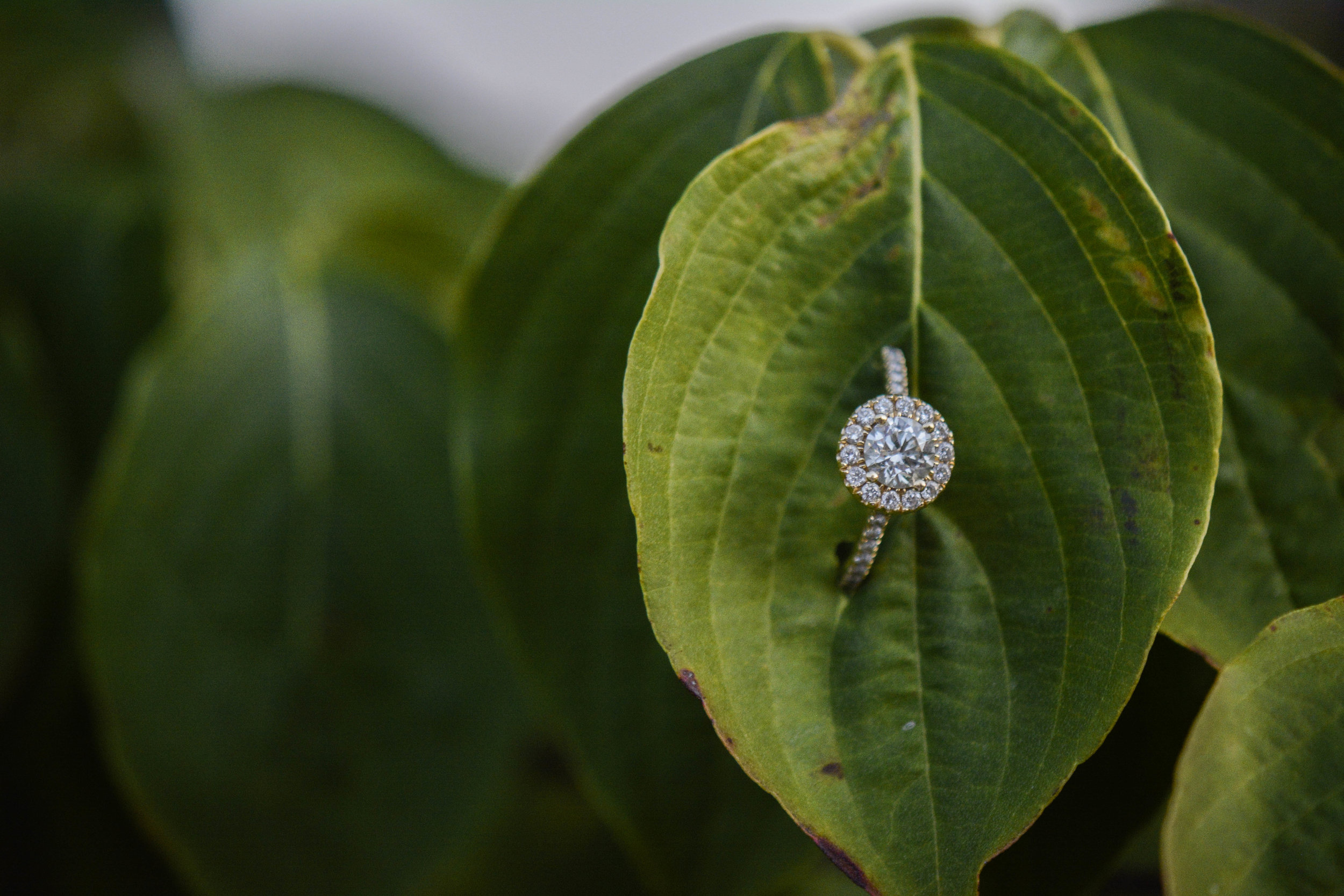 downtown Rock Hill engagement ring photo