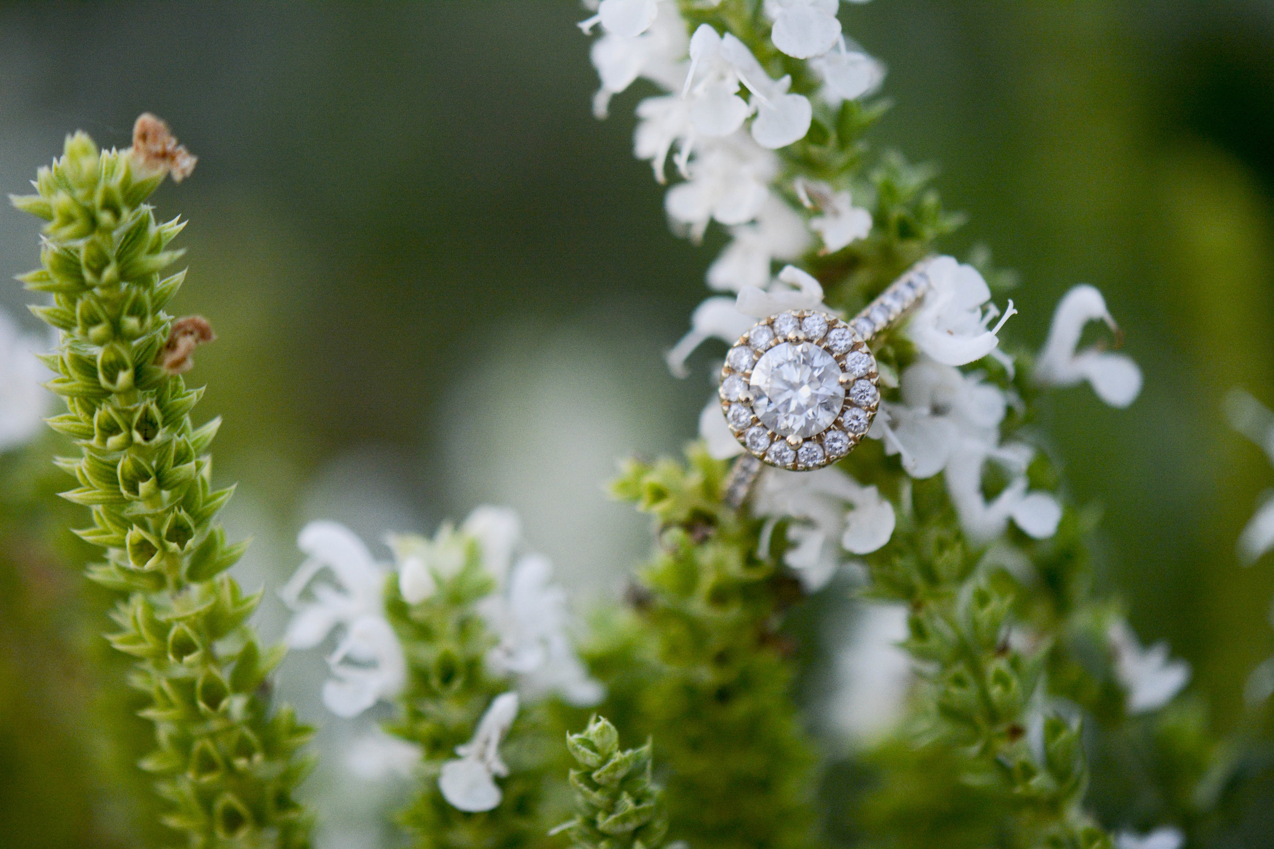 Winthrop Rock Hill engagement ring photo