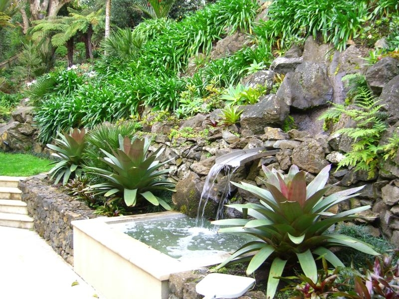 Water Feature and Garden.jpg
