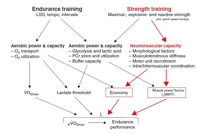 Determinants of endurance performance and how resistance training might assist (Midgley, McNaughton, & Jones, 2007).