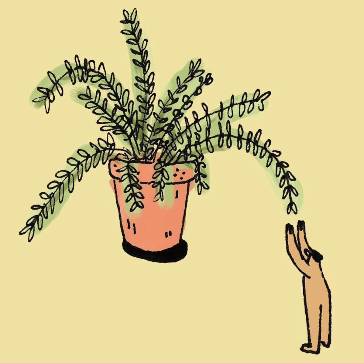 Pictured: Lily Xie's illustration about the beauty of ferns - Source: https://www.instagram.com/p/BVgA55hgPK6/