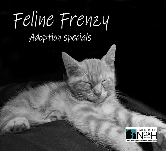 feline frenzy adoption specials.jpg