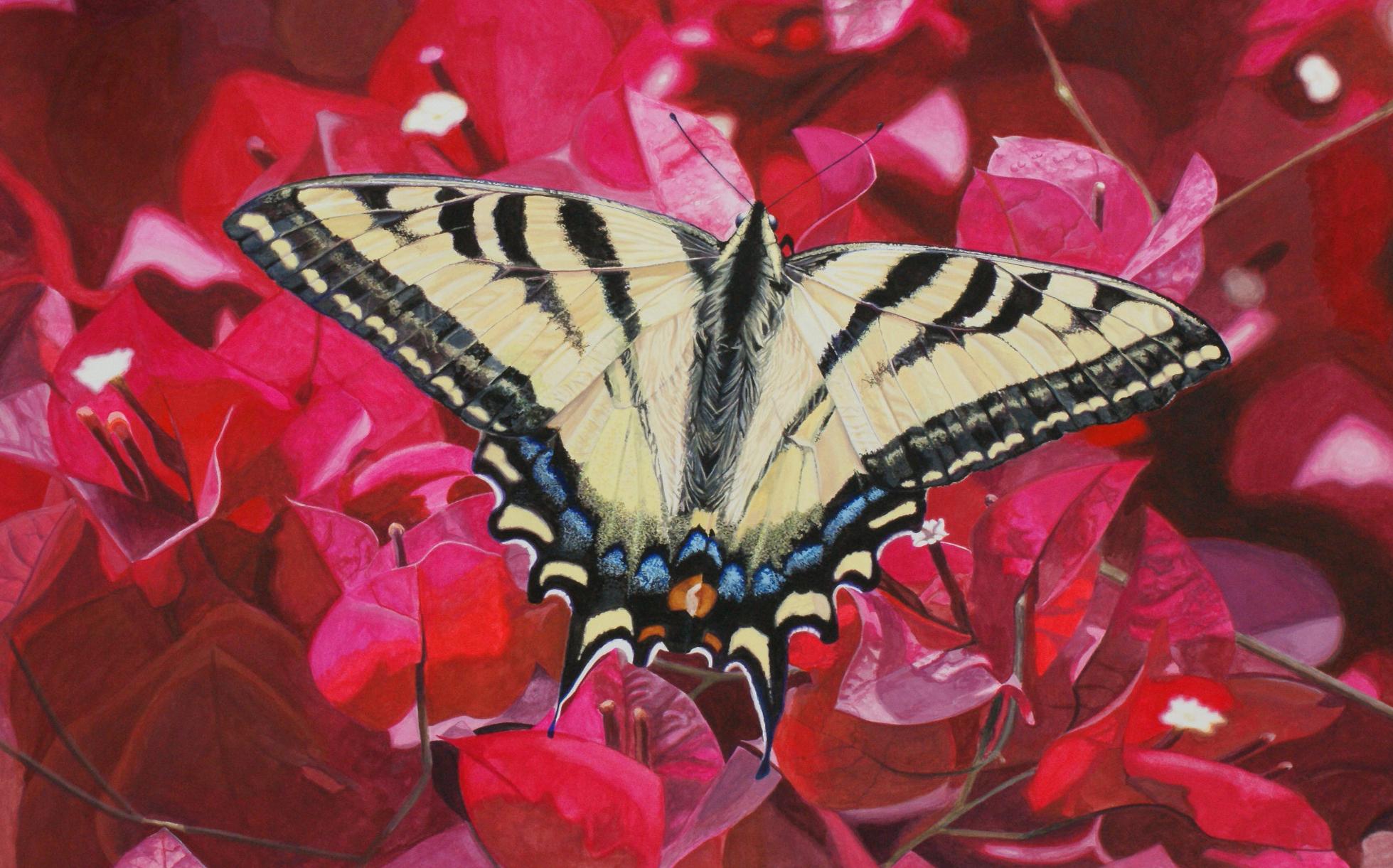 AniseSwallowtail.jpg