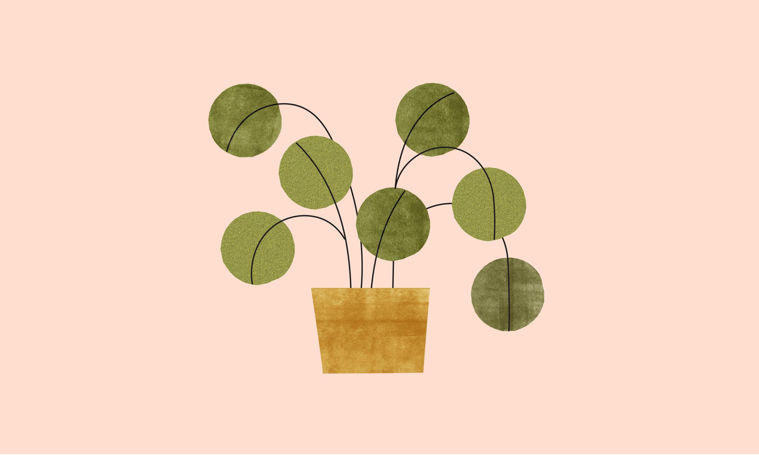 chinese money plant-01.jpg