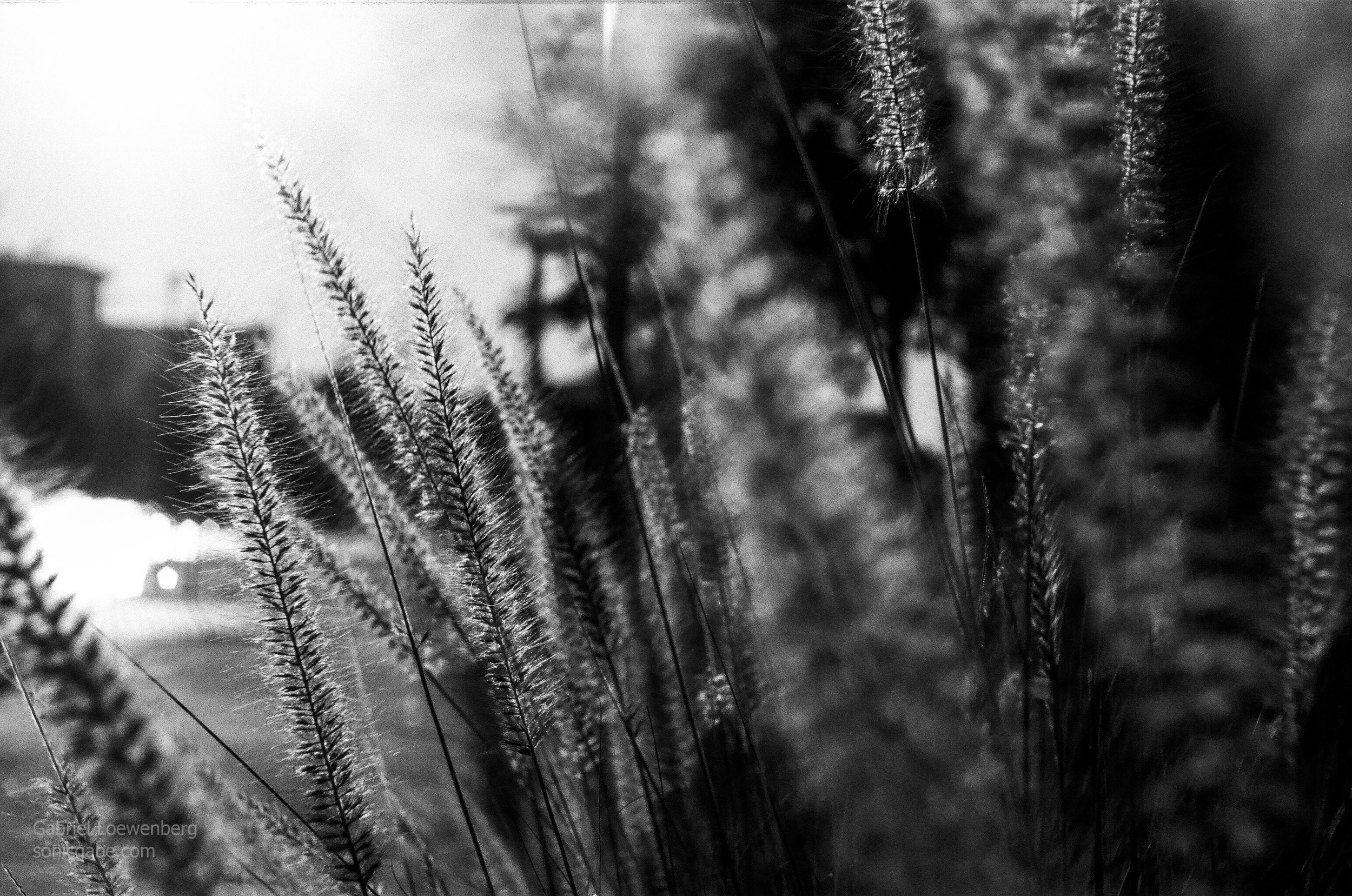 Shot with a 1951/52 Exa Version 1 on Fuji Neopan 100 Acros