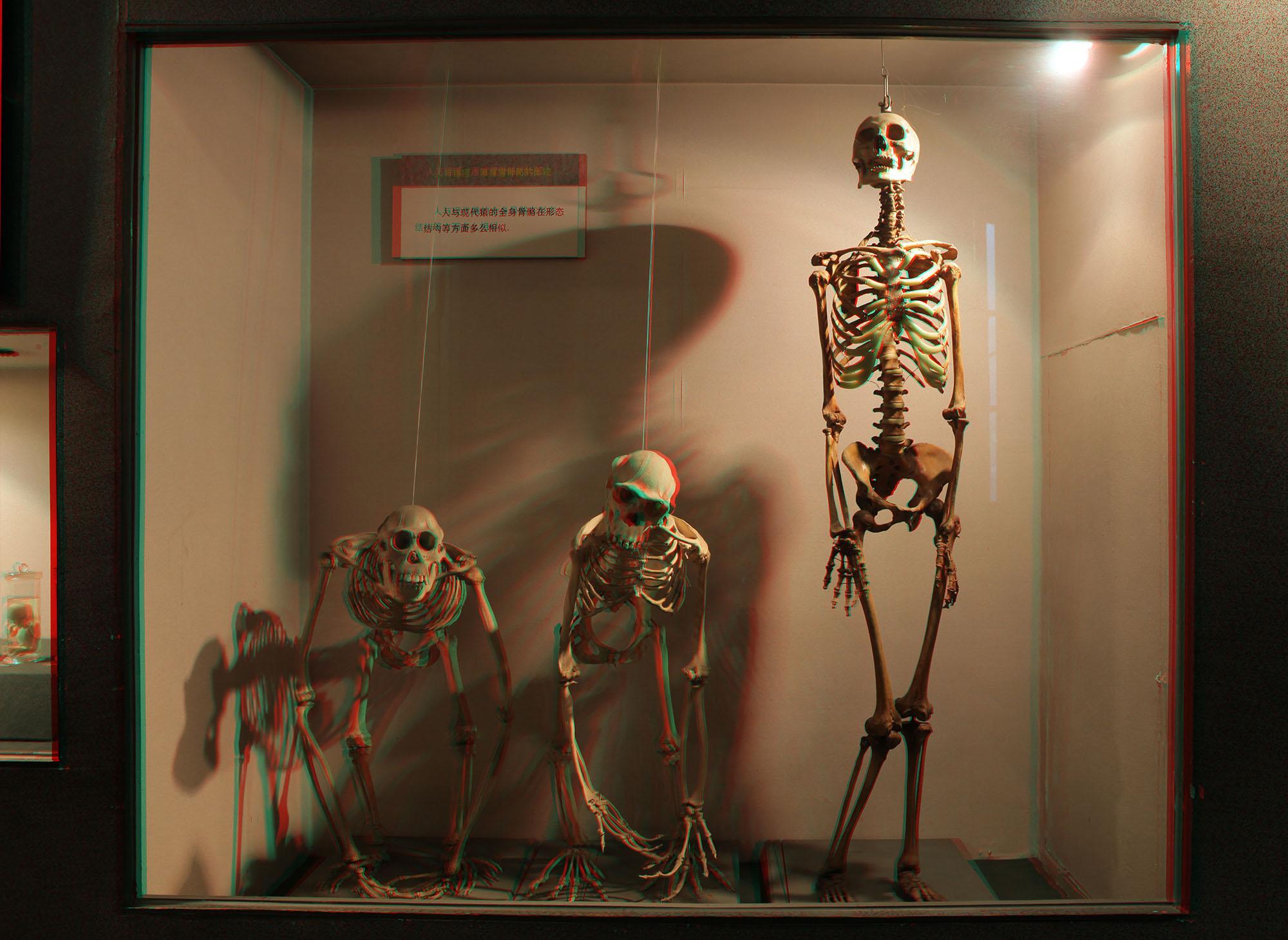 the skulls.jpg