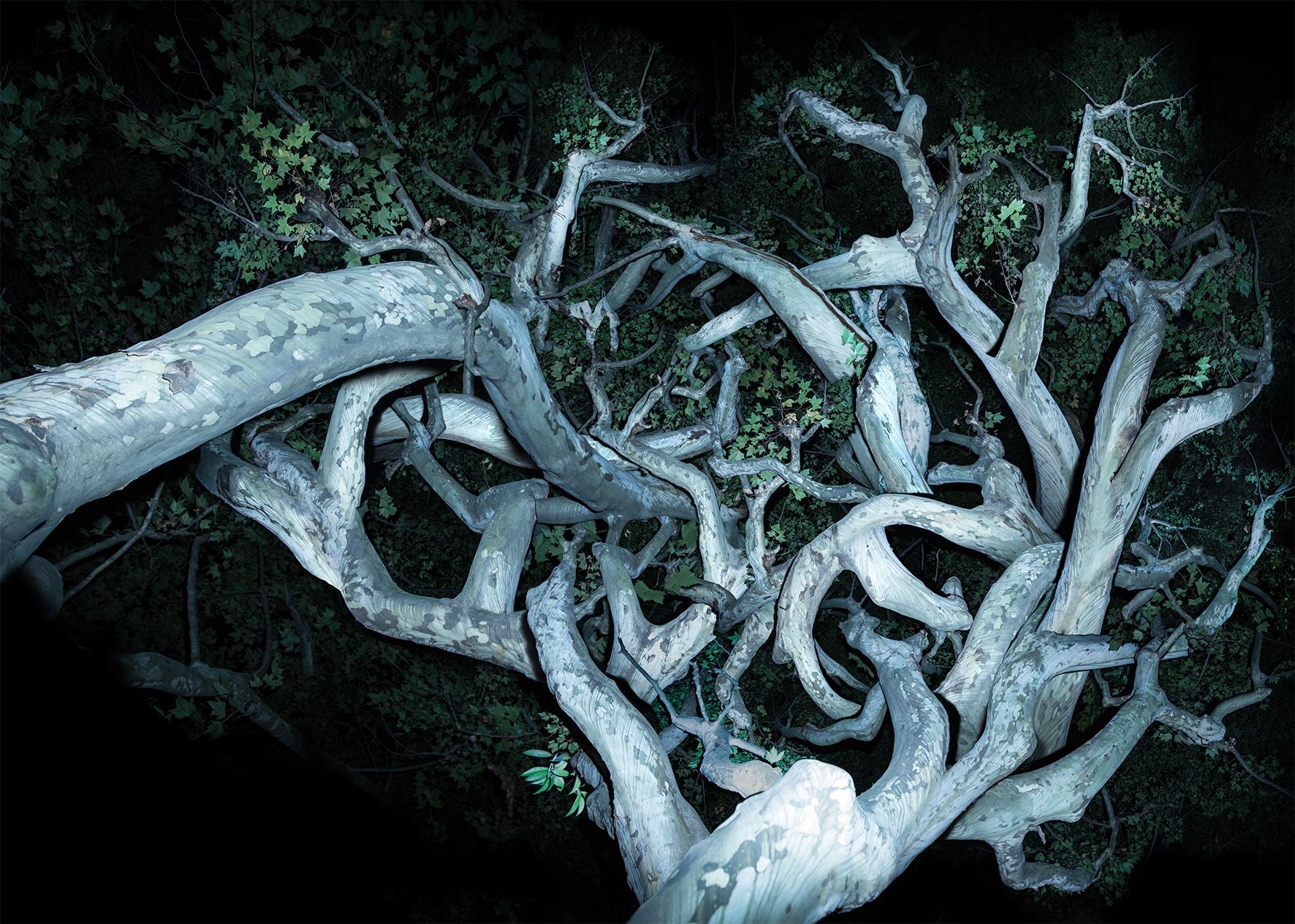 树-3-The-Tree-No.3--艺术微喷-Ultra-Giclee--160-x-224-cm--2017.jpg