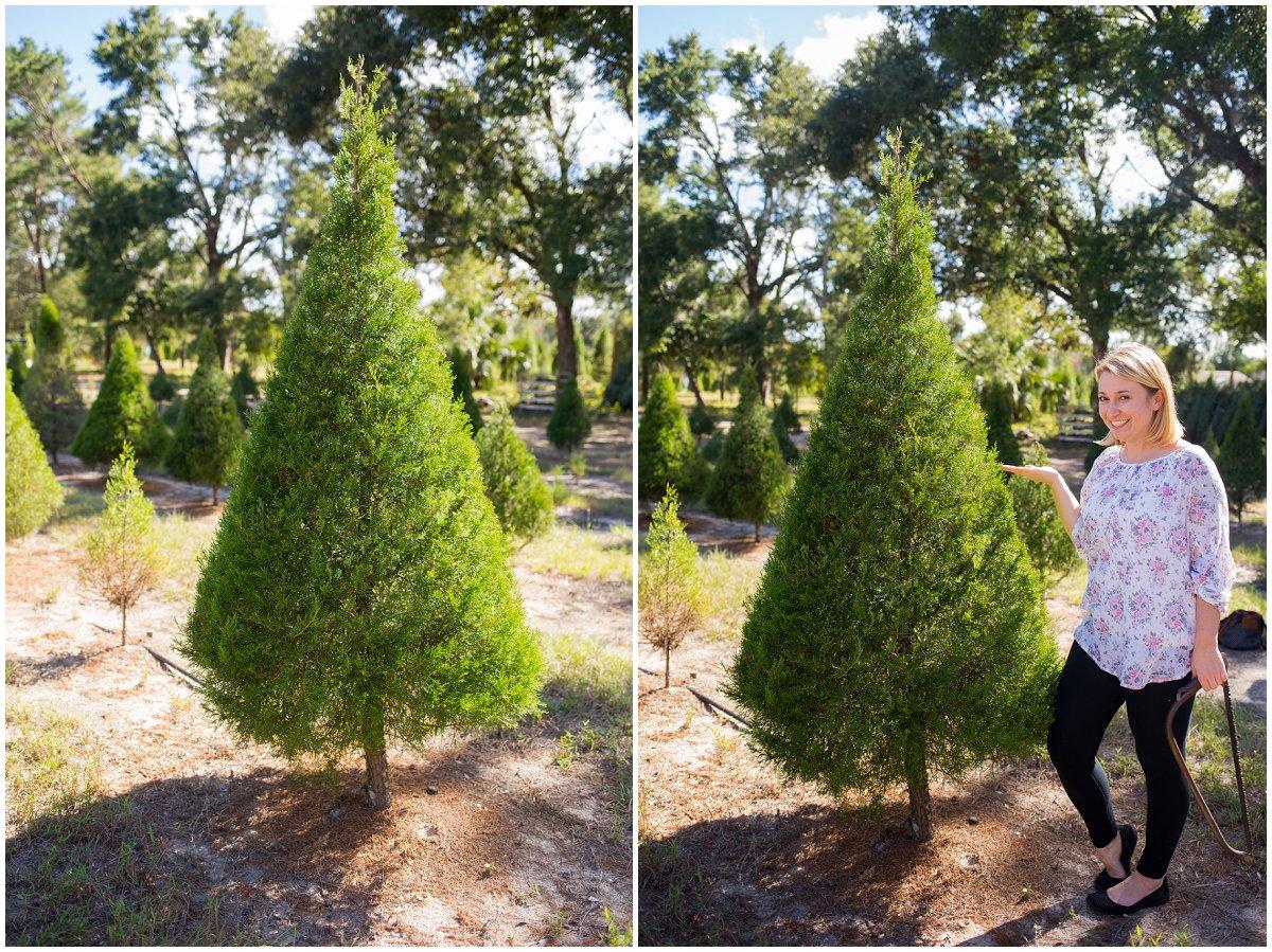 Eustis-Christmas-Tree-farm.jpg