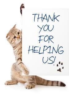 cat-thank-you.jpg