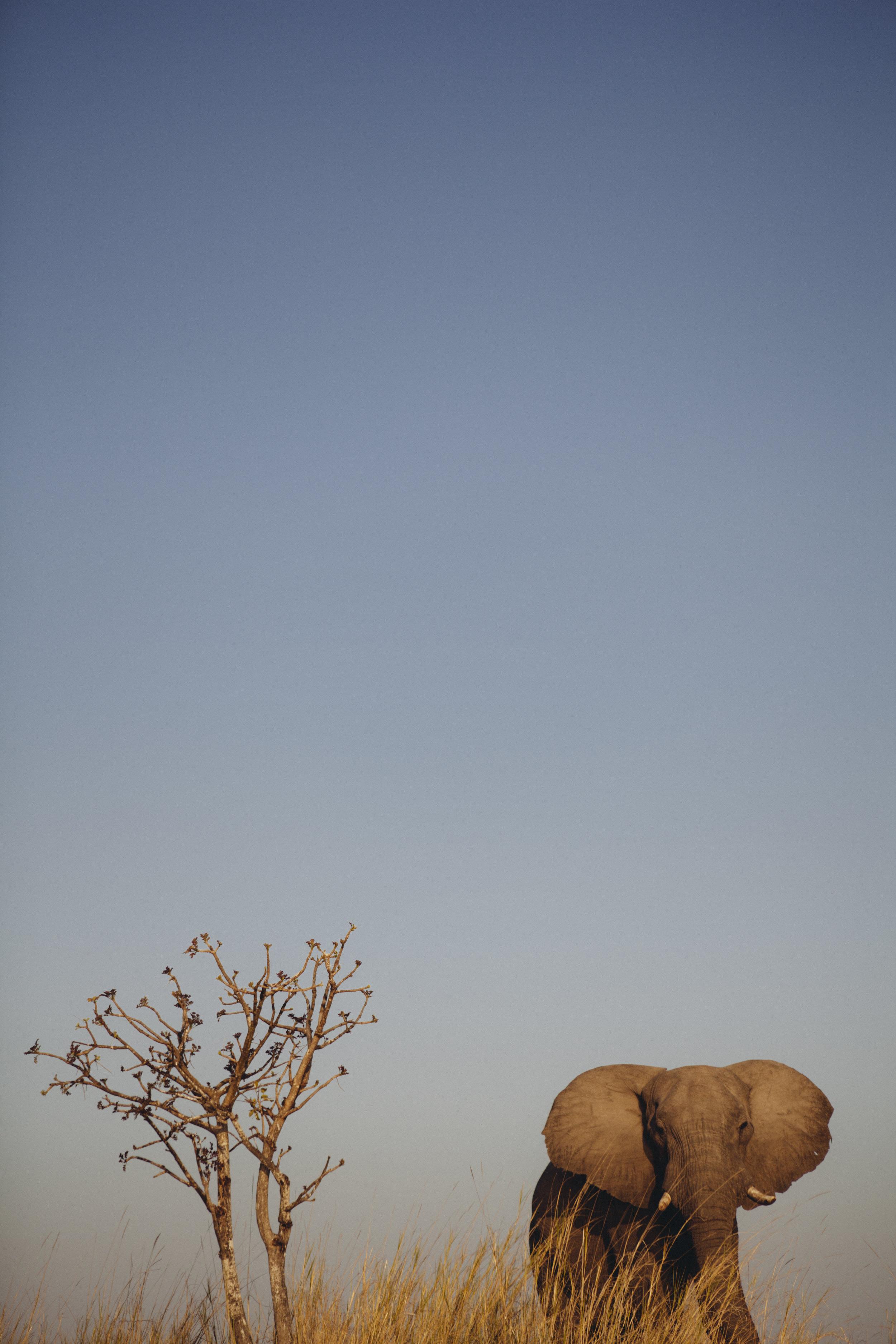 Zambia 37.jpg