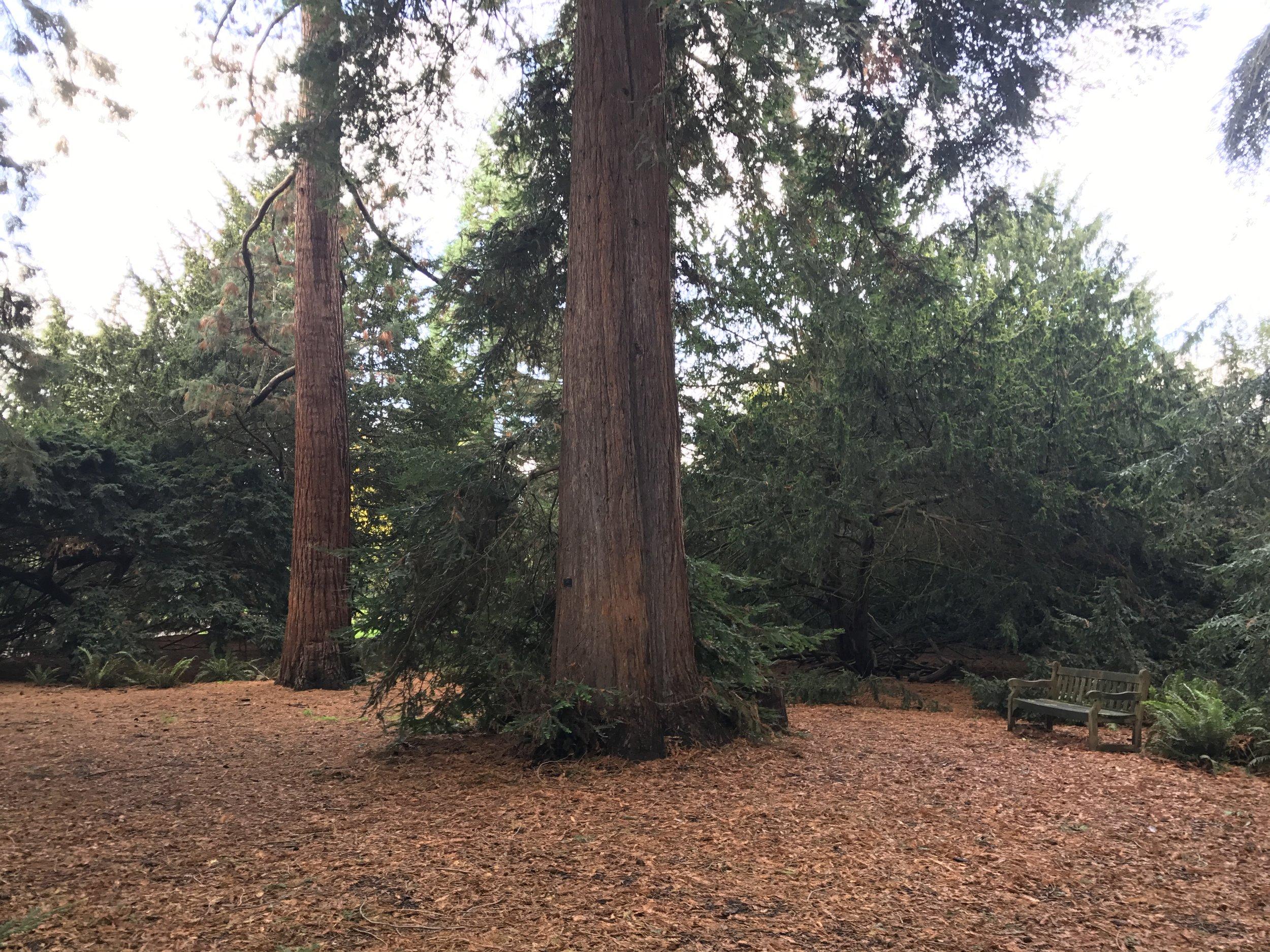 Kew Gardens – Redwood Grove