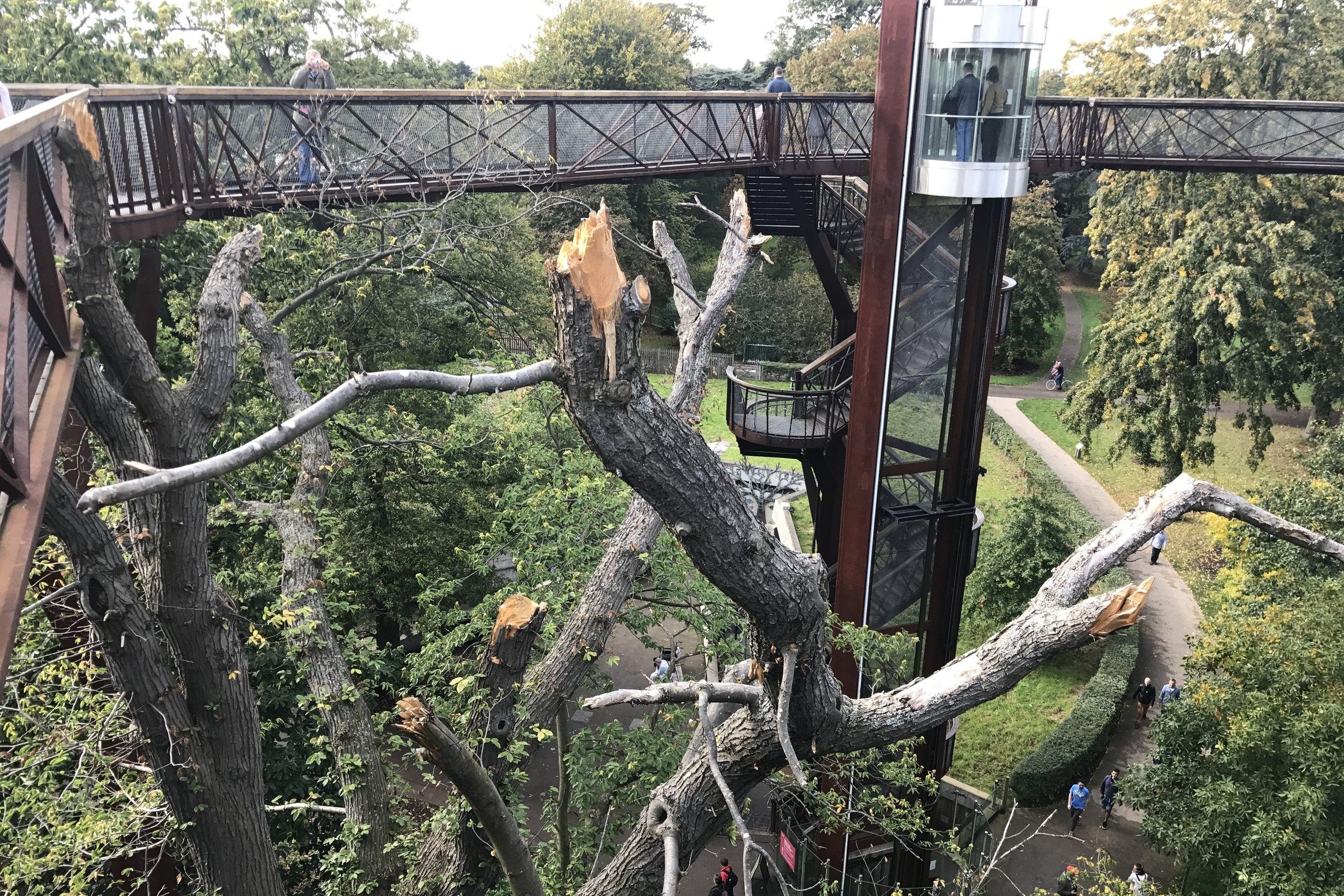 Kew Gardens – Treetop Walkway
