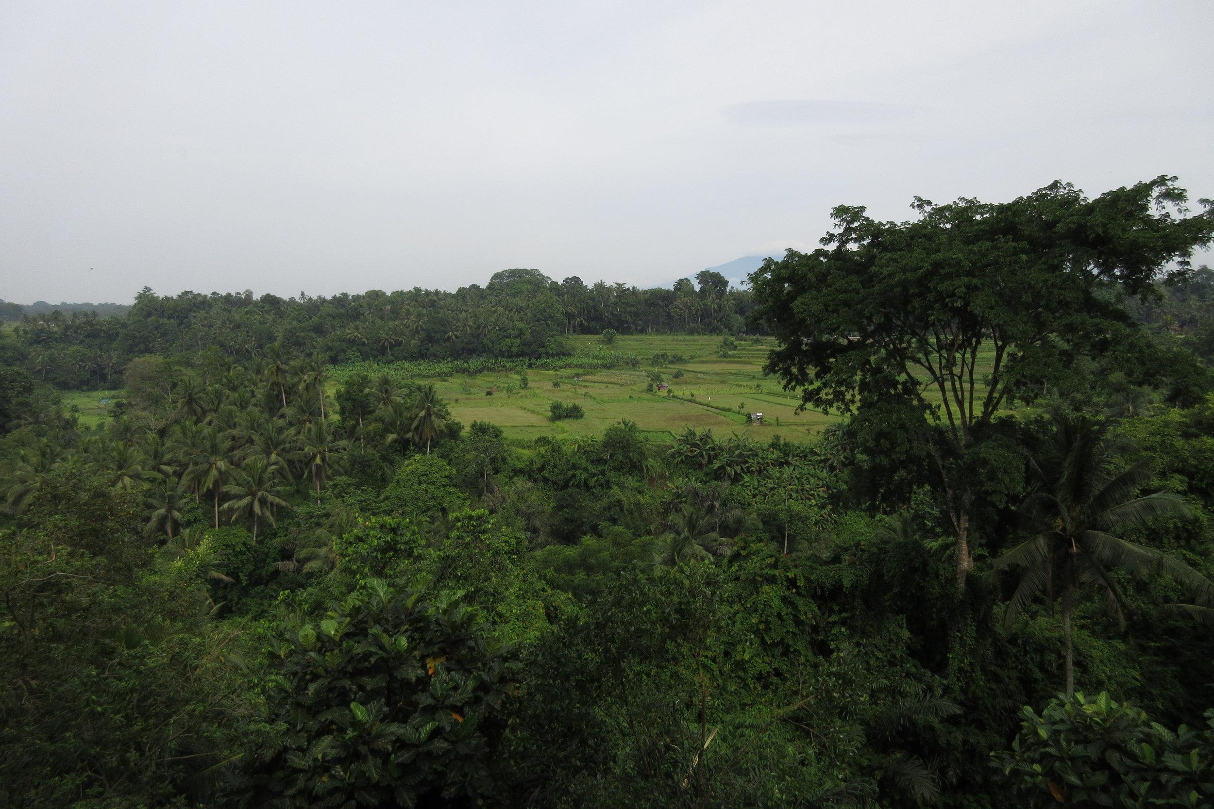 Bambu Indah Ubud – Views from the cliffside