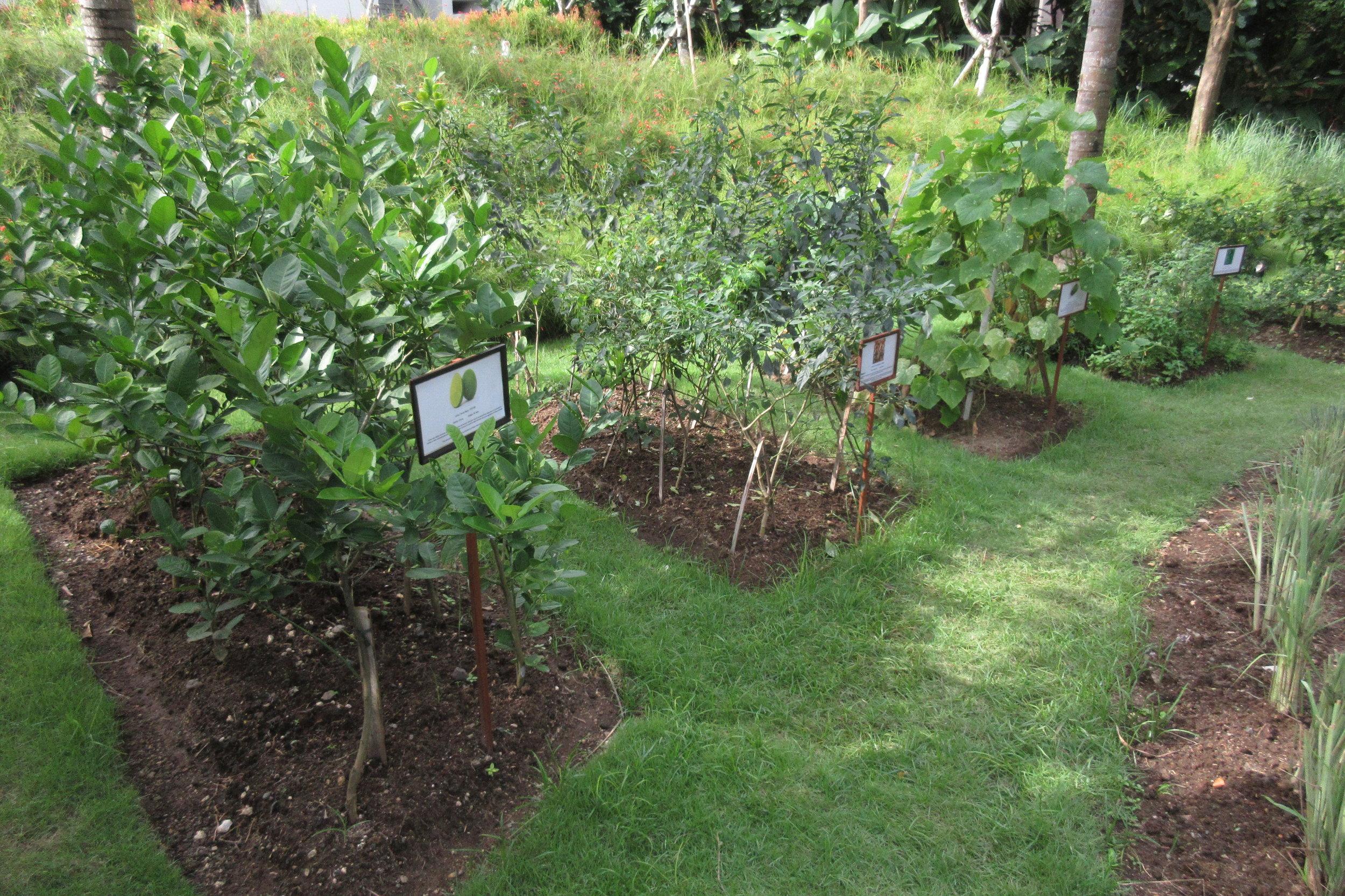 The Ritz-Carlton, Bali – Herb garden