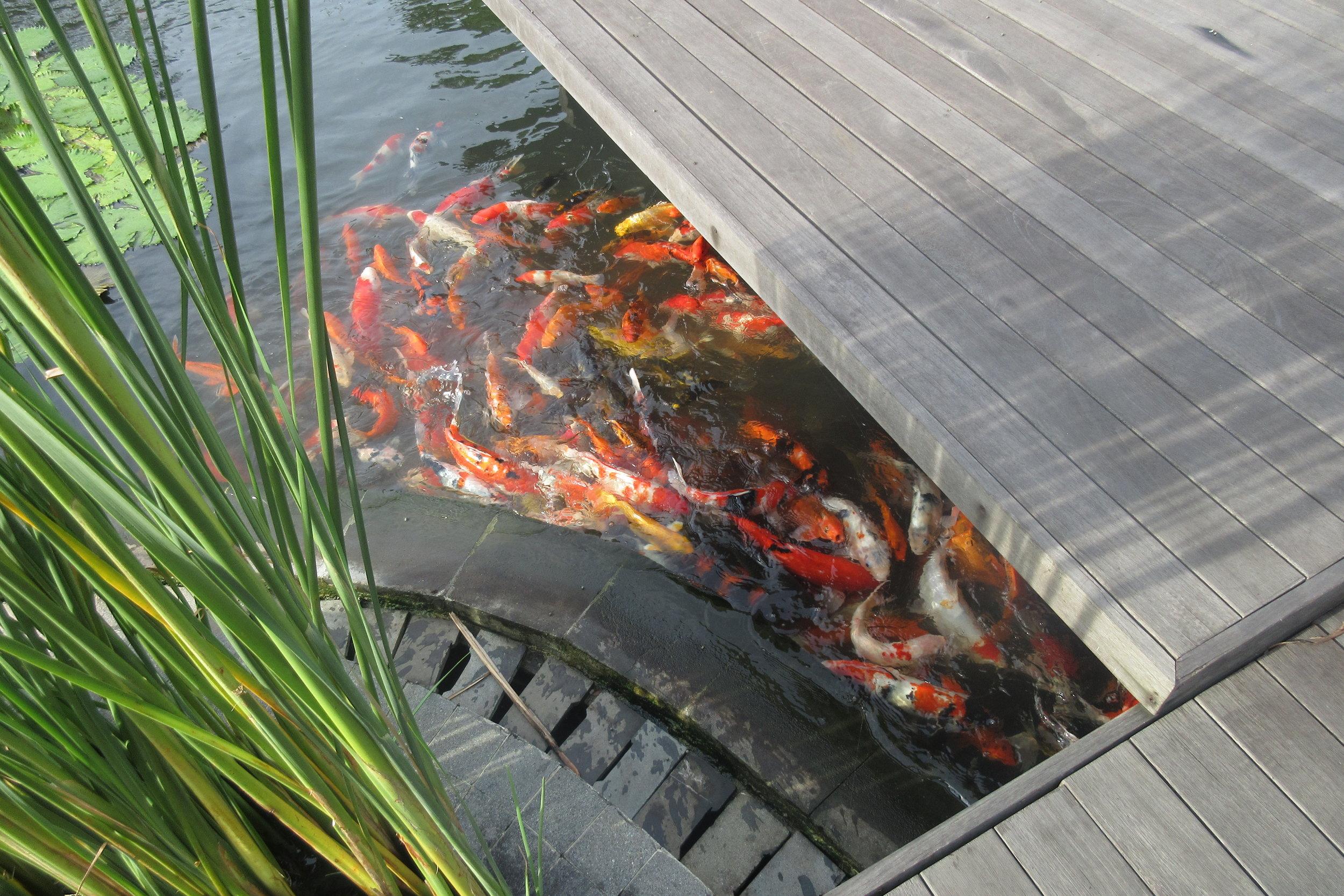 The Ritz-Carlton, Bali – Koi pond