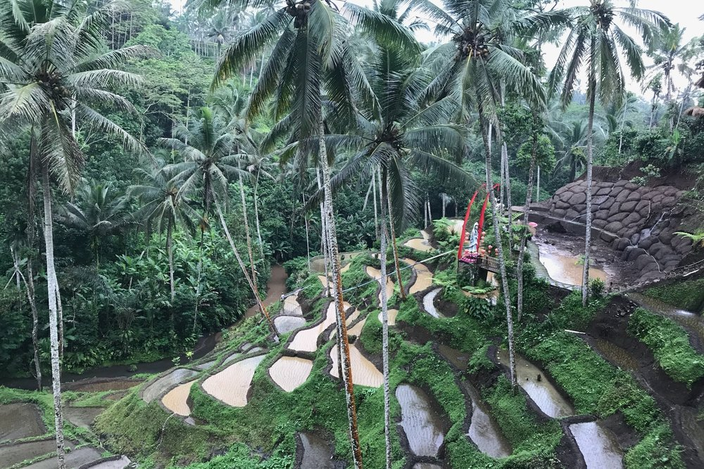 The Best of Bali -