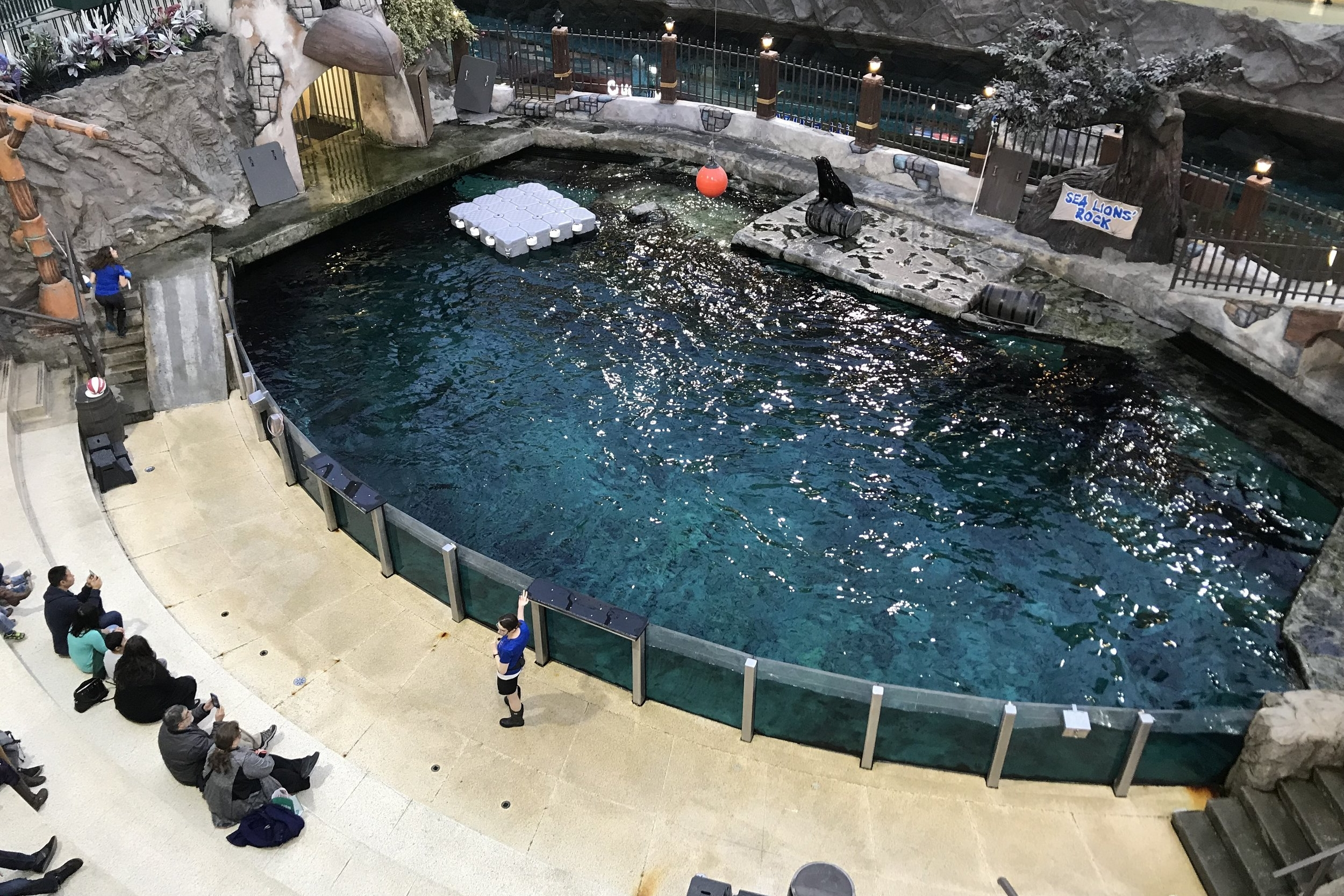 Sea lion show at the West Edmonton Mall