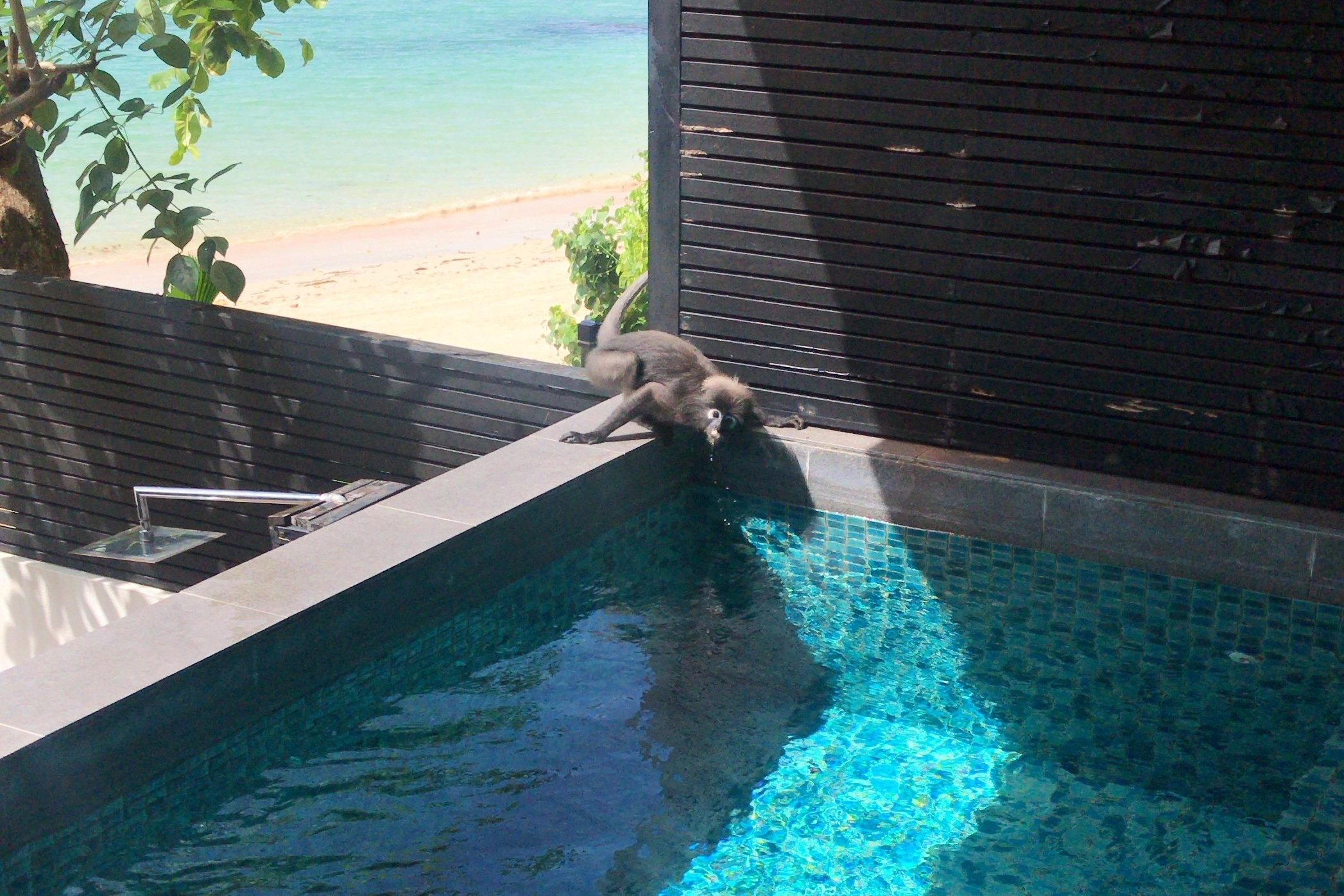 The Andaman Langkawi – Monkeys!