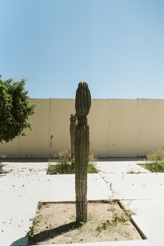 April Yentas Photography - Los cabos-4.jpg