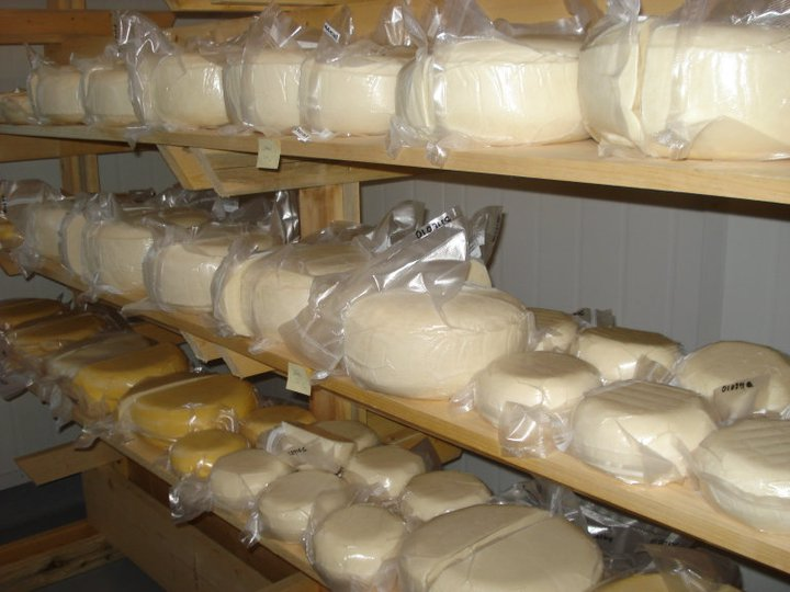 Vacuum sealed cheese wheels in the aging room. Held for 2-3 months at 10-12 degrees in the aging rooms.