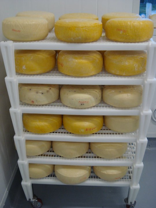 Natural rinded cheese wheels in the aging room.