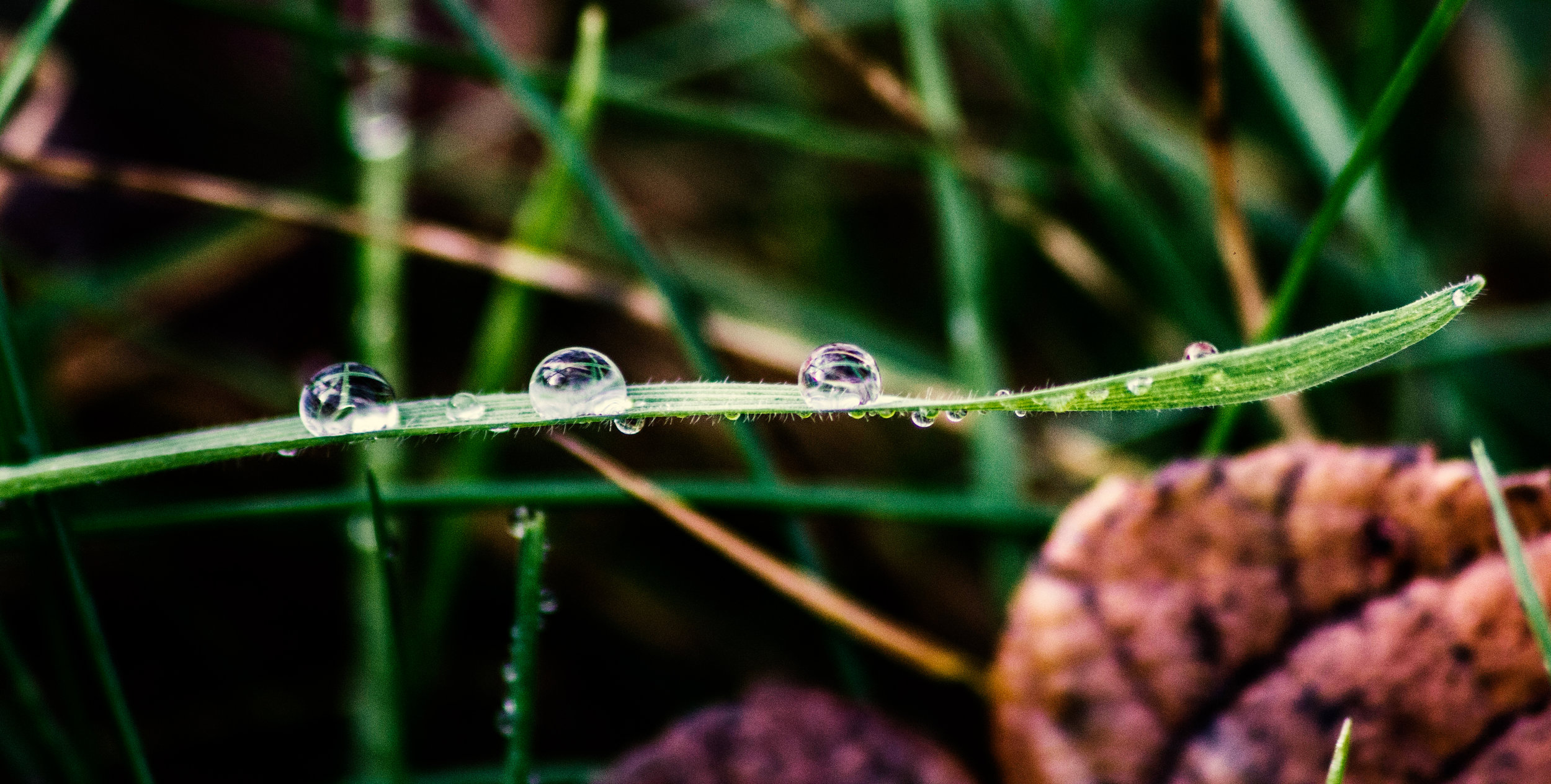 Water Droplets On A Blade Of Grass!