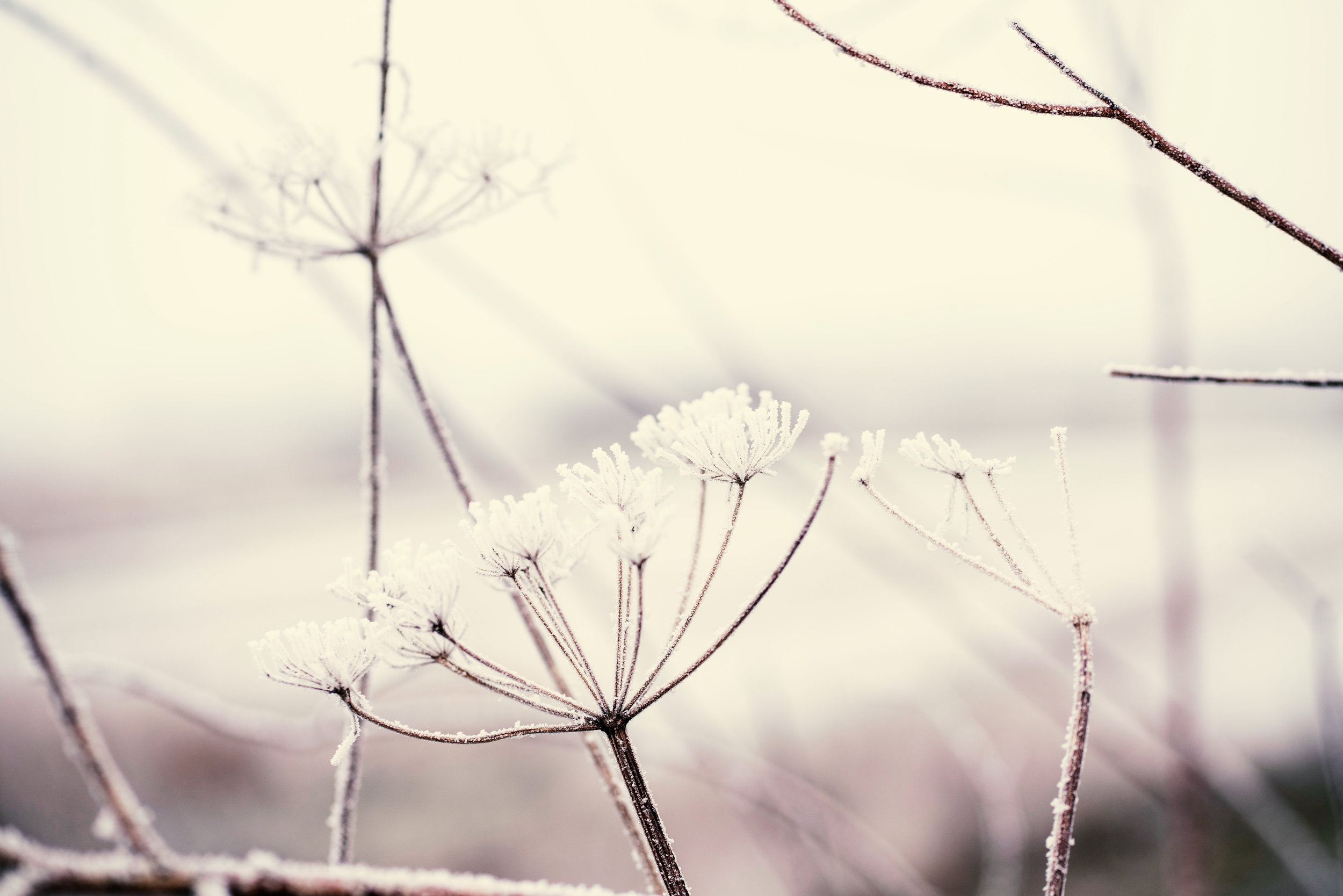 Macro shot of icy plants