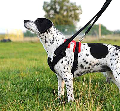 Dog Games Shop - Perfect Fit Harness