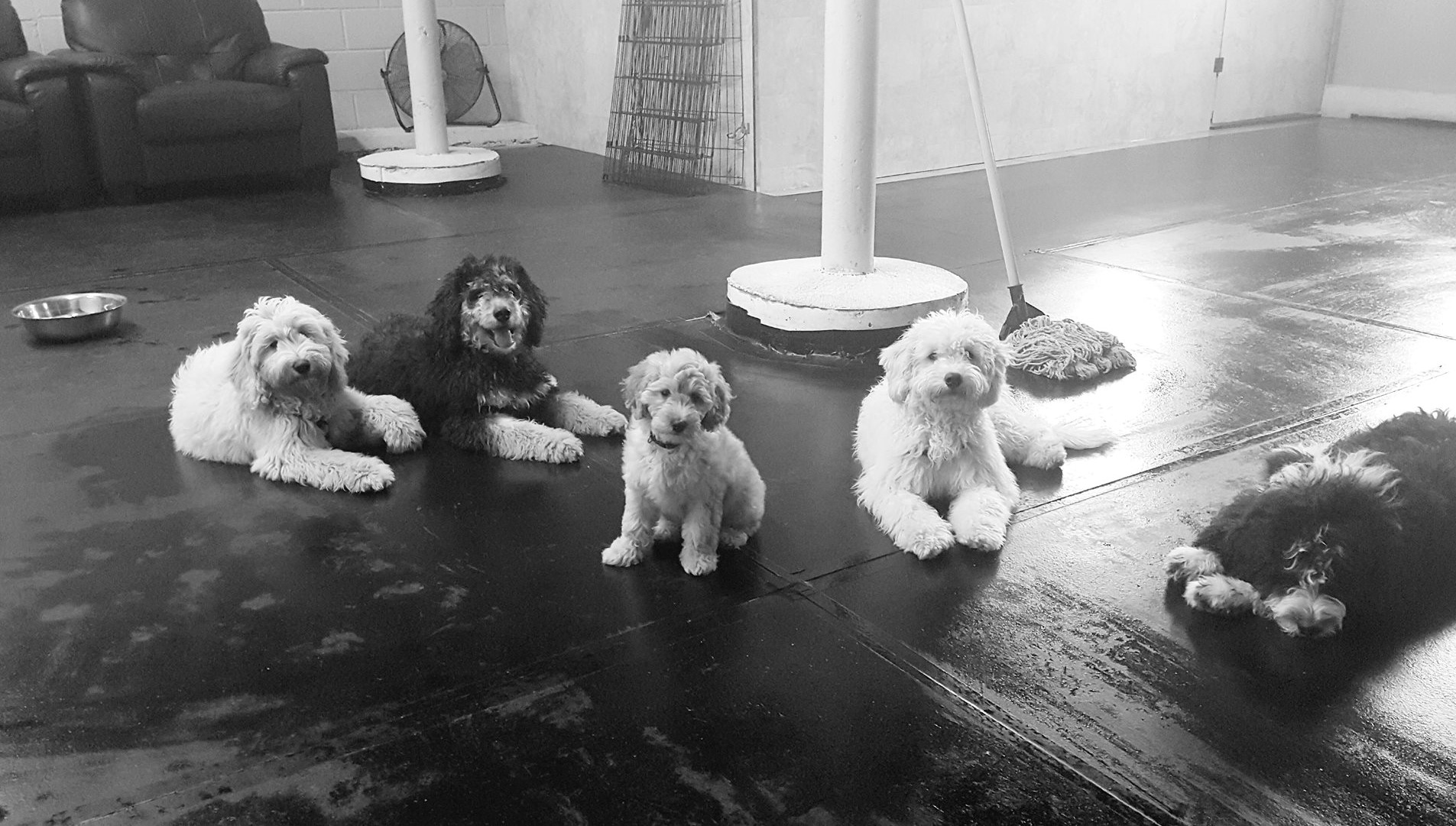 Bella, Connor, Desi, Jaxon and Oreo