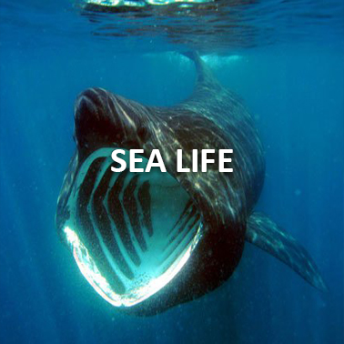 Inishowen Sea Life