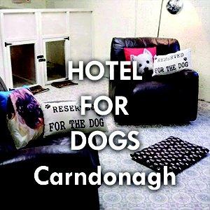 Hotel_For_Dogs.jpg