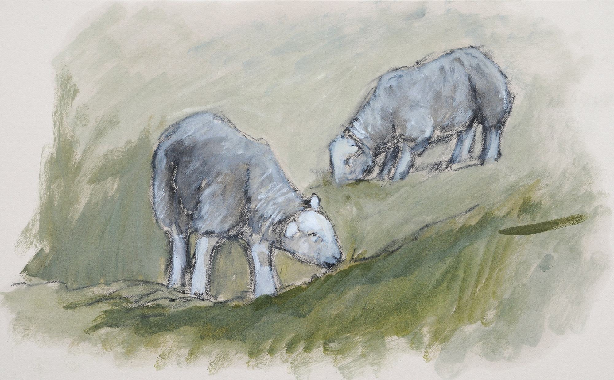 Herdwicks grazing sketch