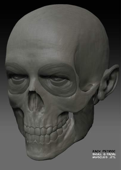 Skull_Muscles_01.jpg
