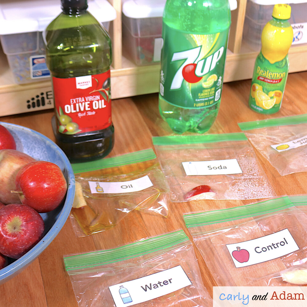 Apple Oxidation Experiment (Why do apples turn brown?)