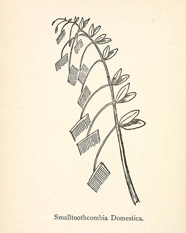 Edward Lear's Nonsense Botany, circa 1870