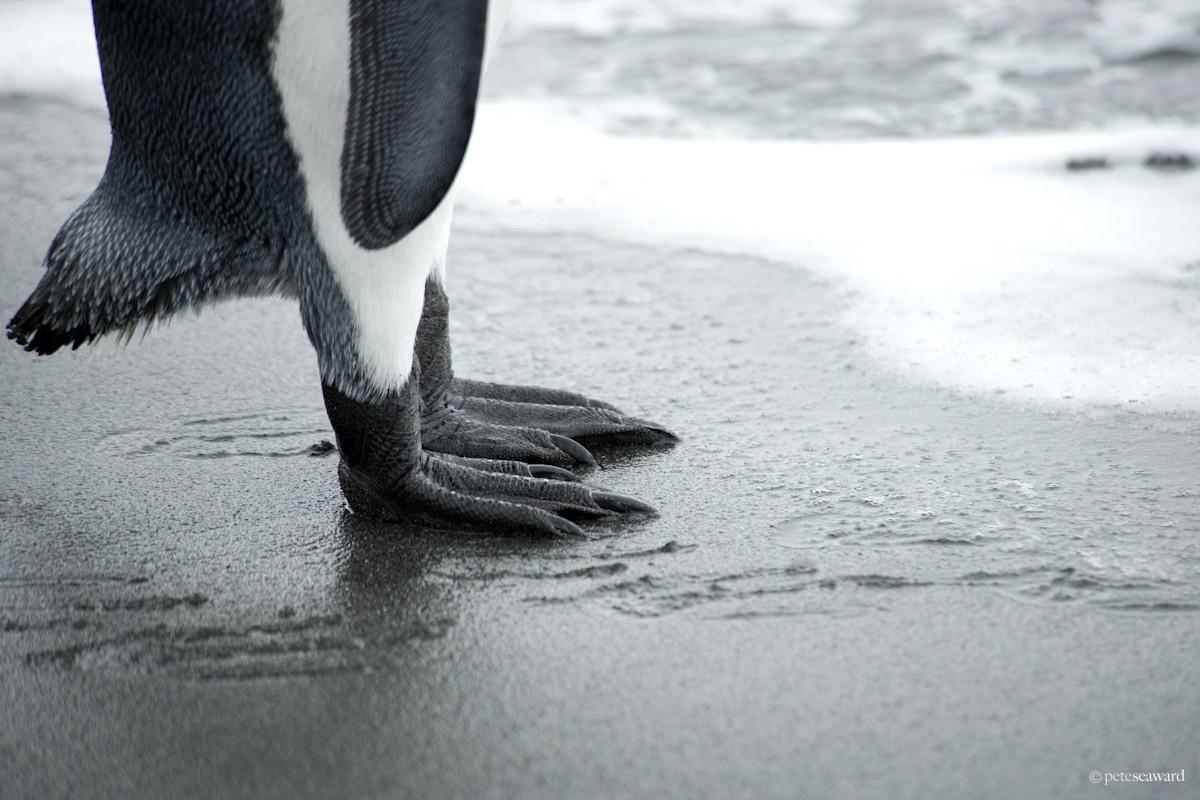 watermark-13.jpg