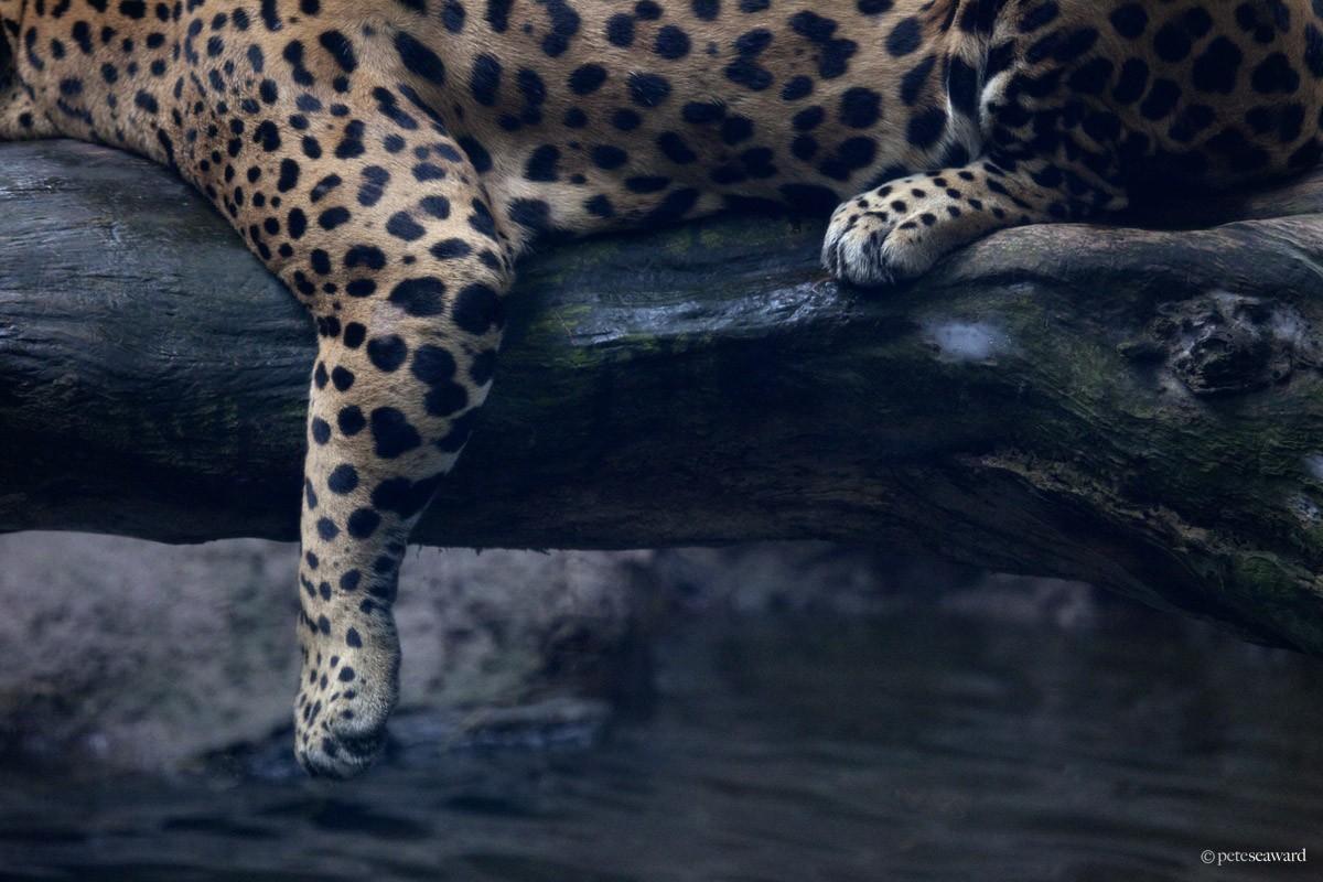 watermark-28.jpg