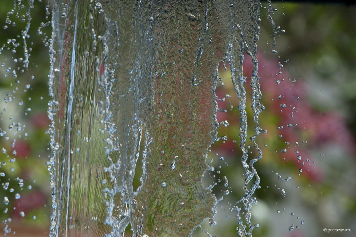 watermark-19.jpg