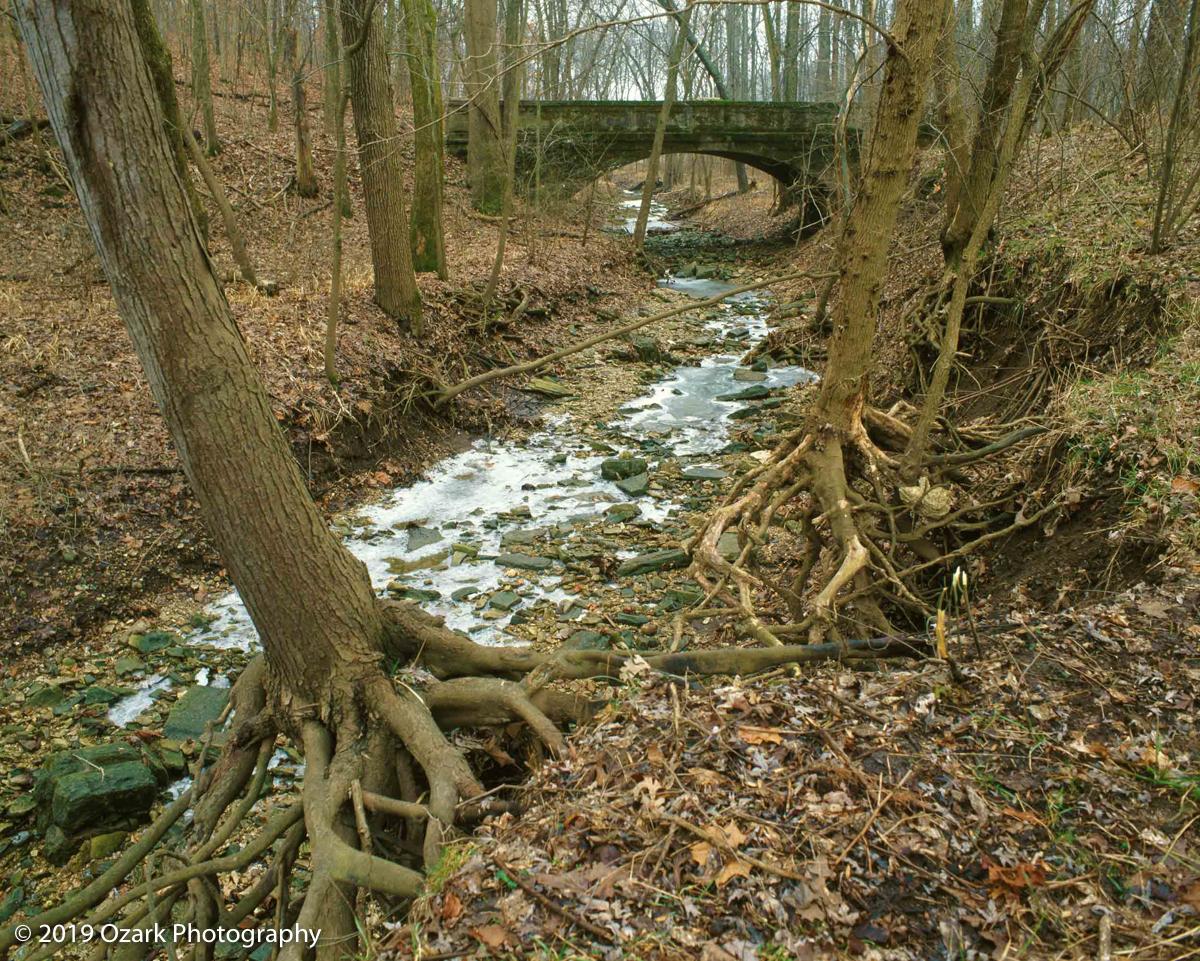 bridgeinwoods.jpg