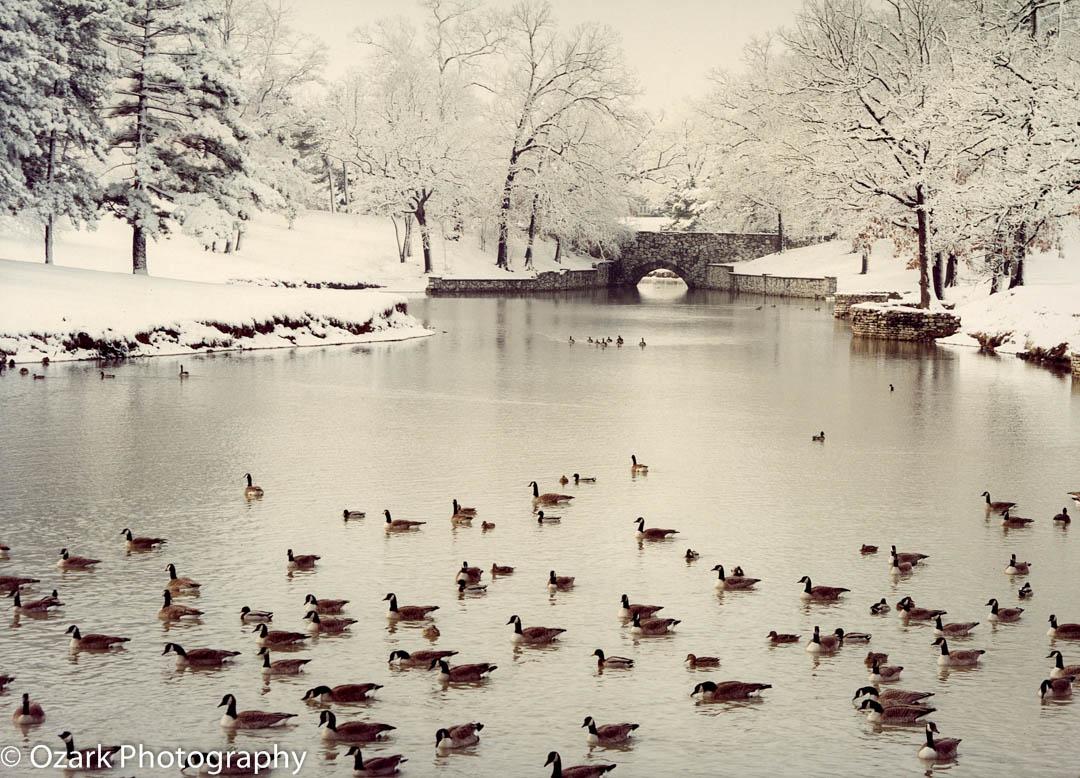 Winter Carondelet Park.jpg